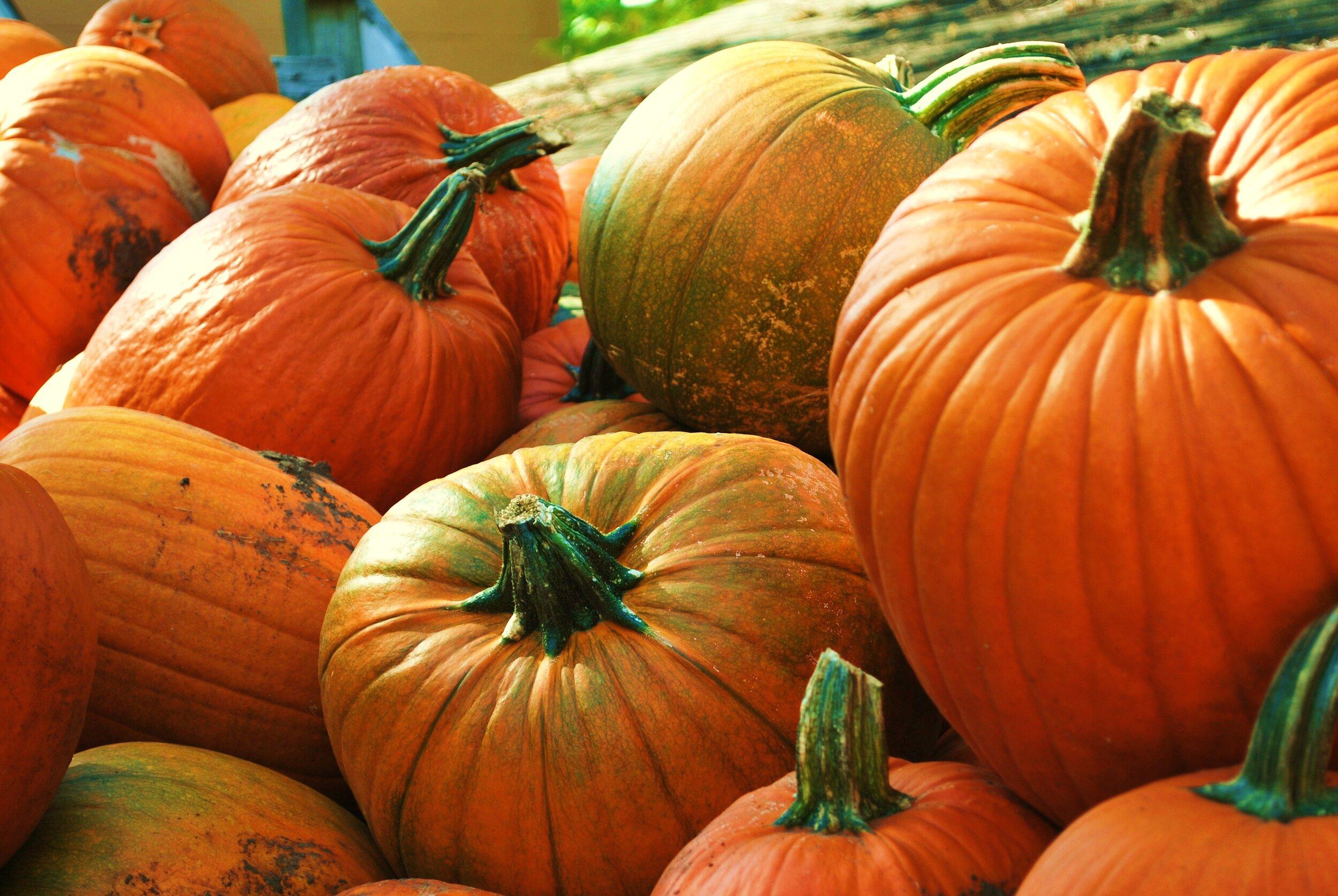 orange-pumpkins-haloween-harvest-variation-rural-farm.jpg