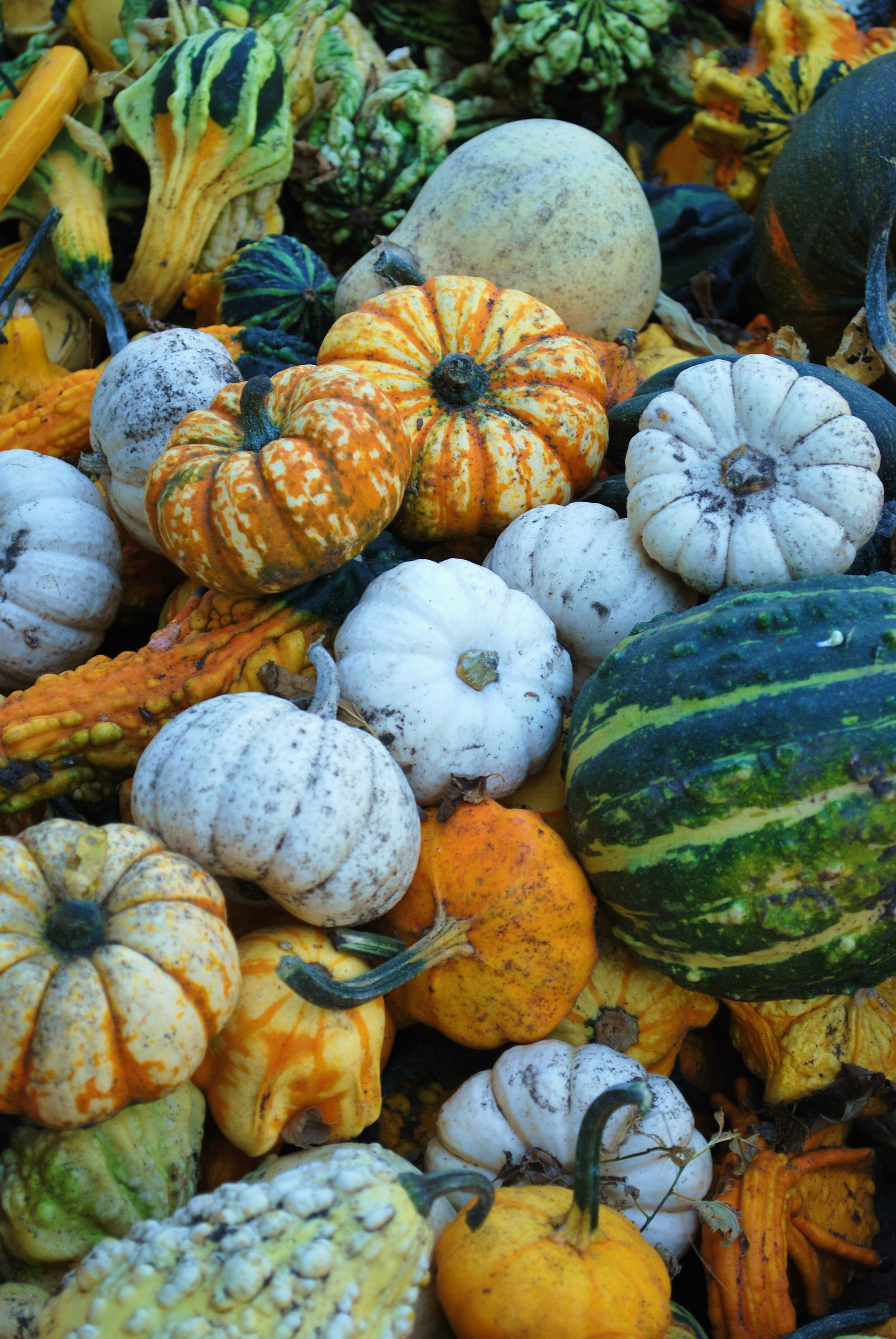 gourds-colorful-fall-harvest-haloween-.jpg