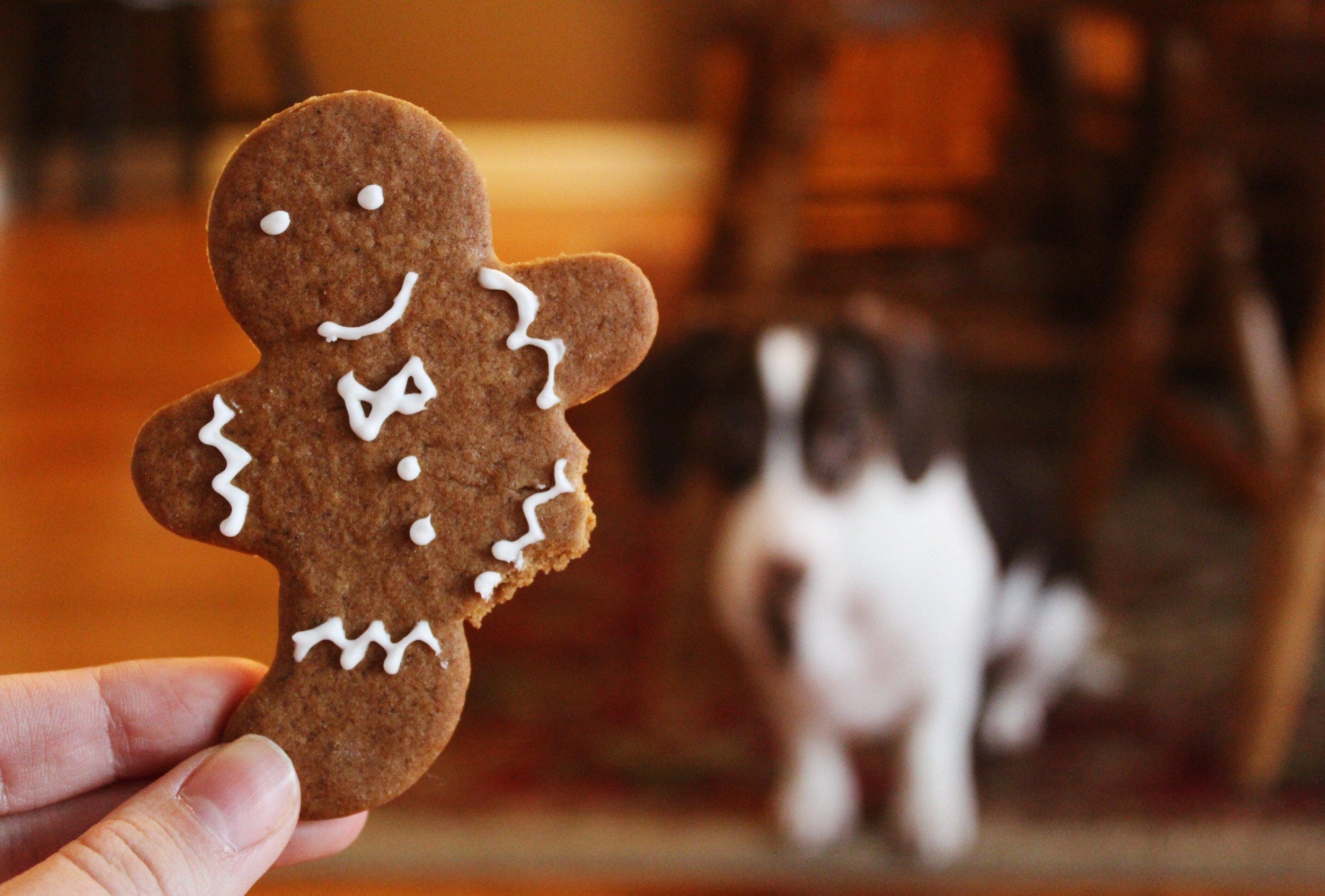 dog-eats-cookie-off-floor