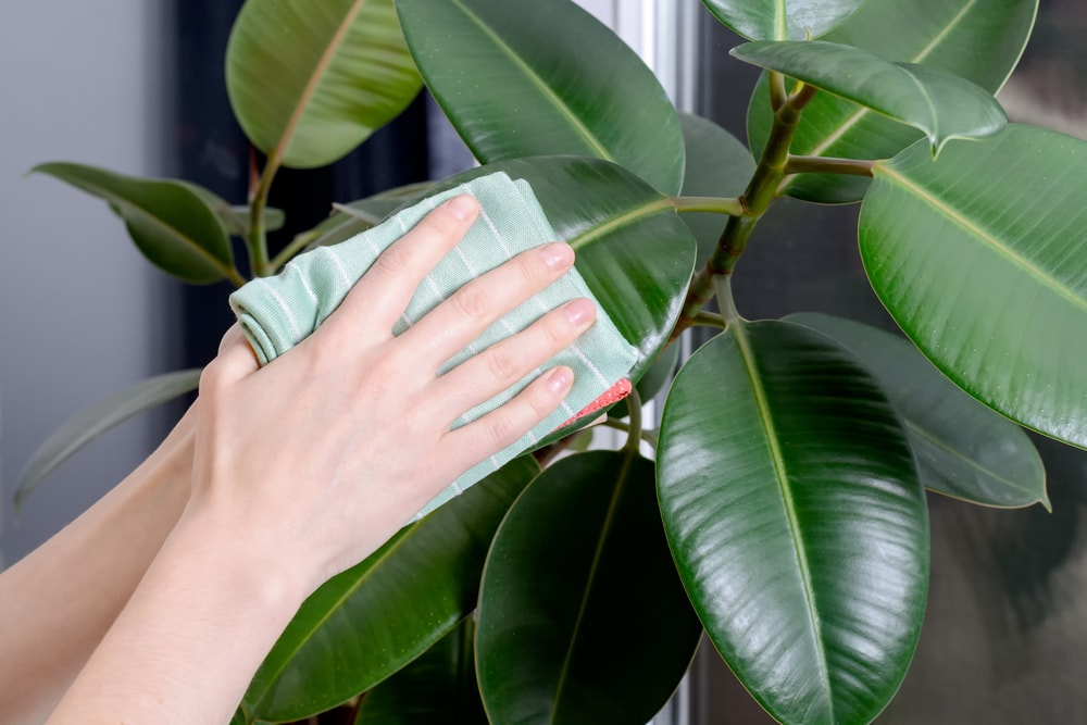 clean-indoor-plants.jpg