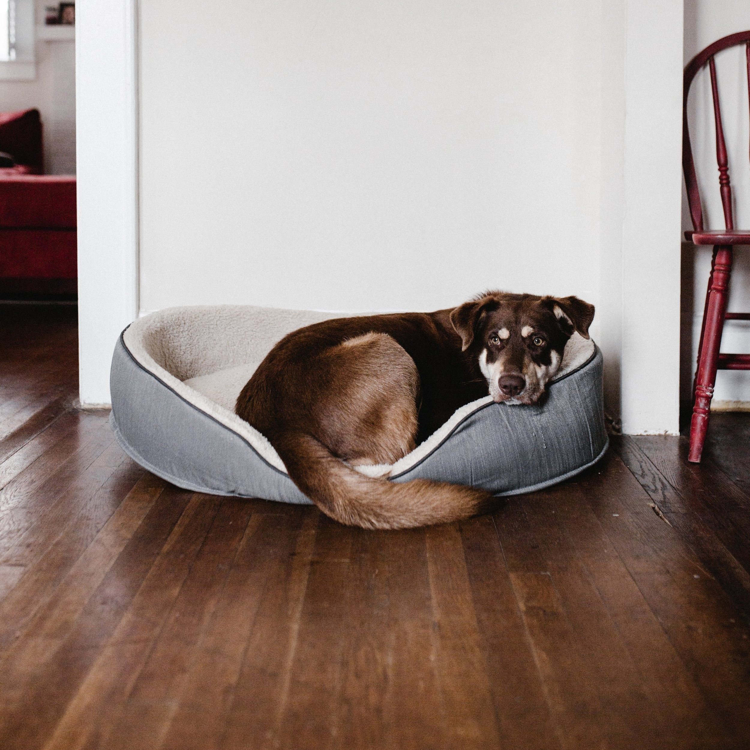 adorable-animal-bed-2248516.jpg