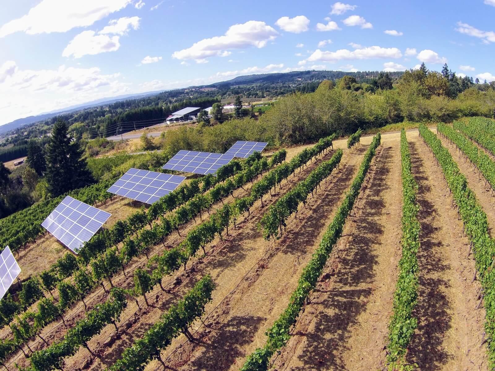 solar panels oregon vineyard winery.jpeg