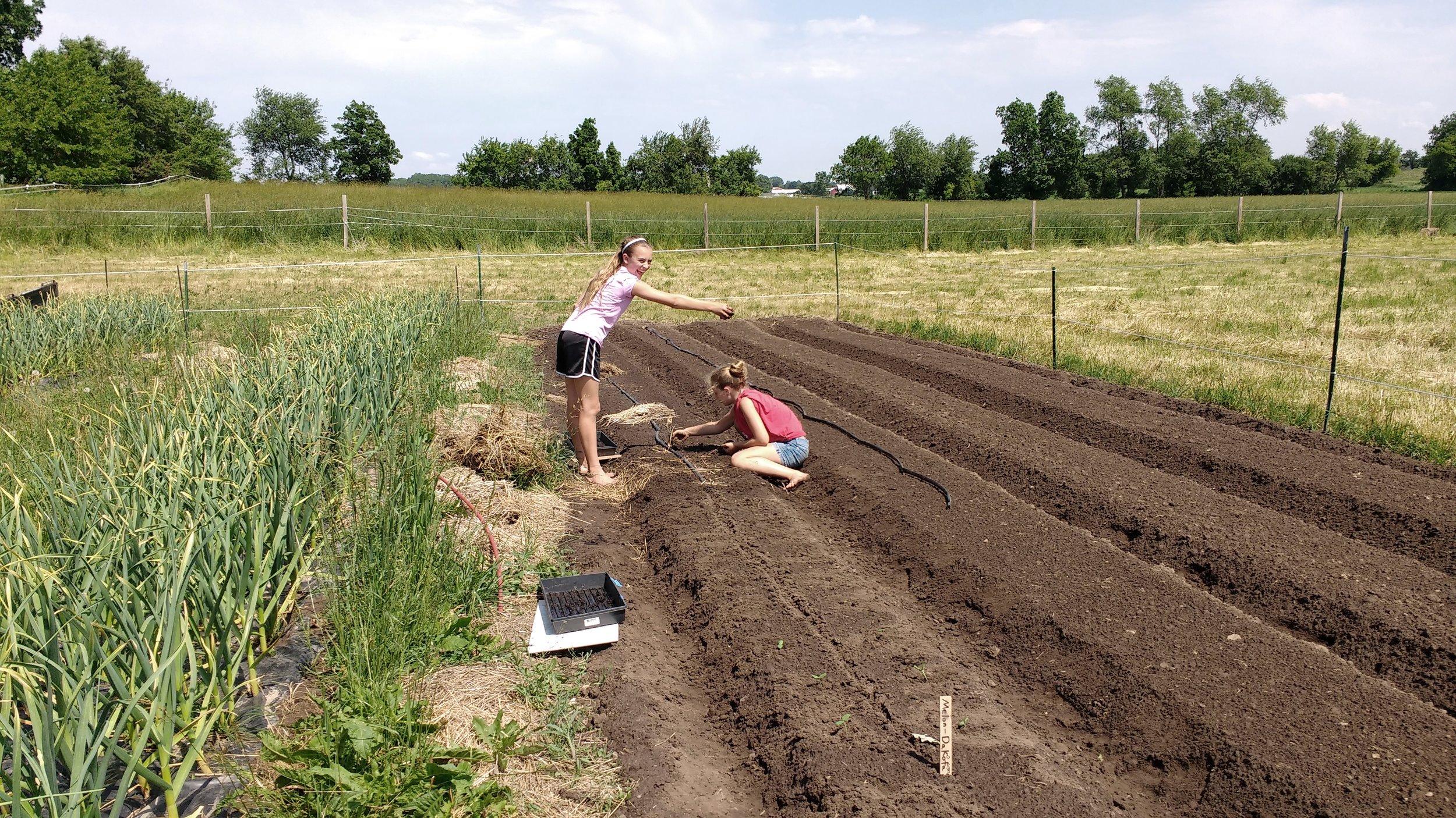 Planting Garlic??