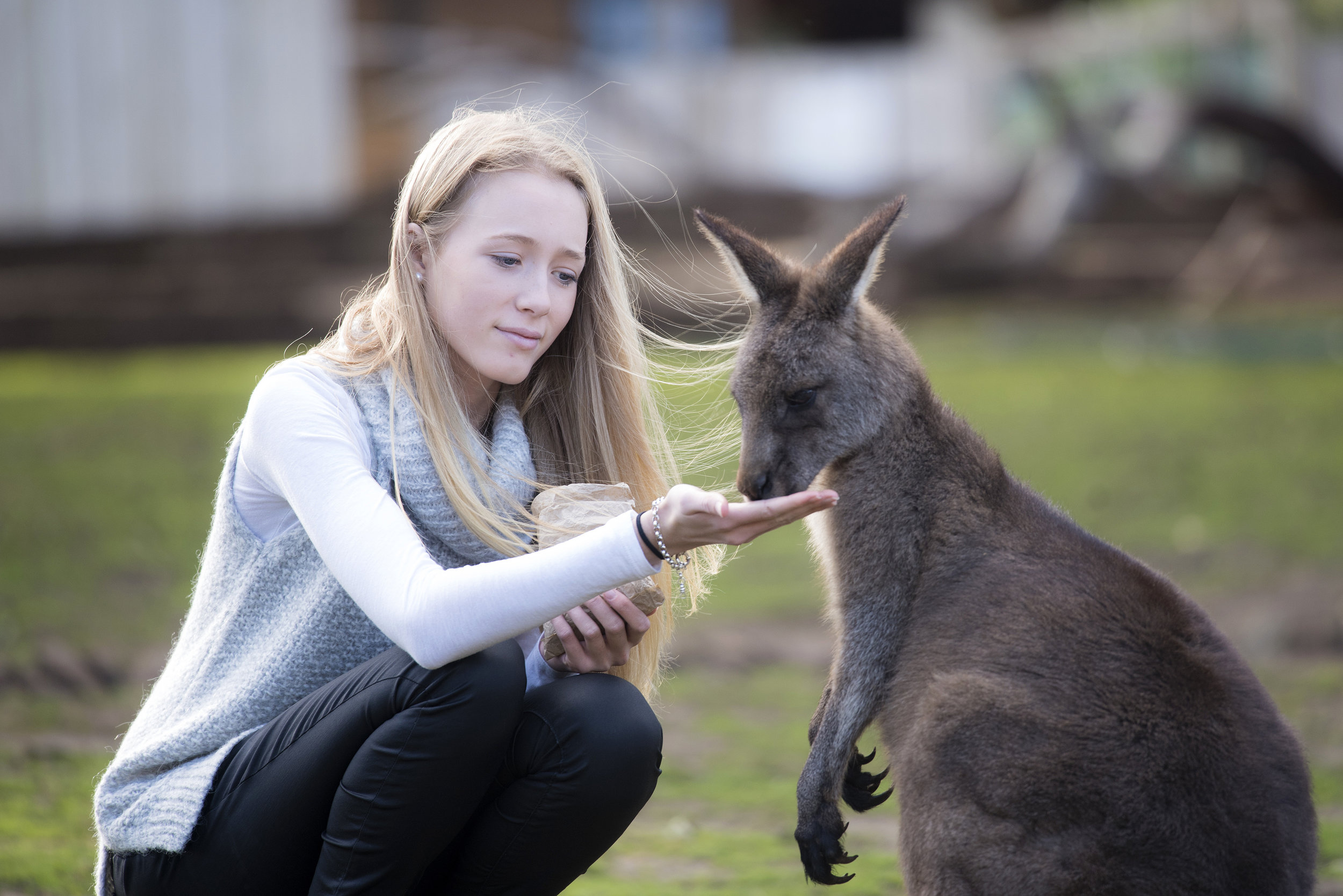 Kangaroo Feeding. If you want to get up close & personal to animals, then Bonorong Wildlife Sanctuary is the place for you. Mandatory credit:  Tourism Tasmania and Rob Burnett