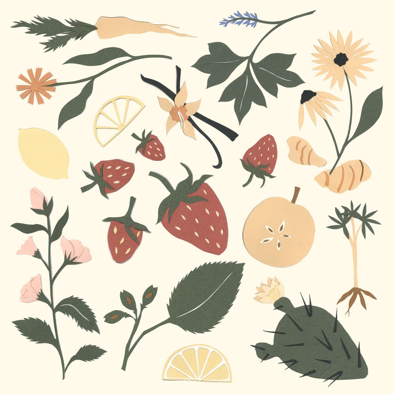 StrawberryVanilla_ElanaGabrielle_Olipop.jpg