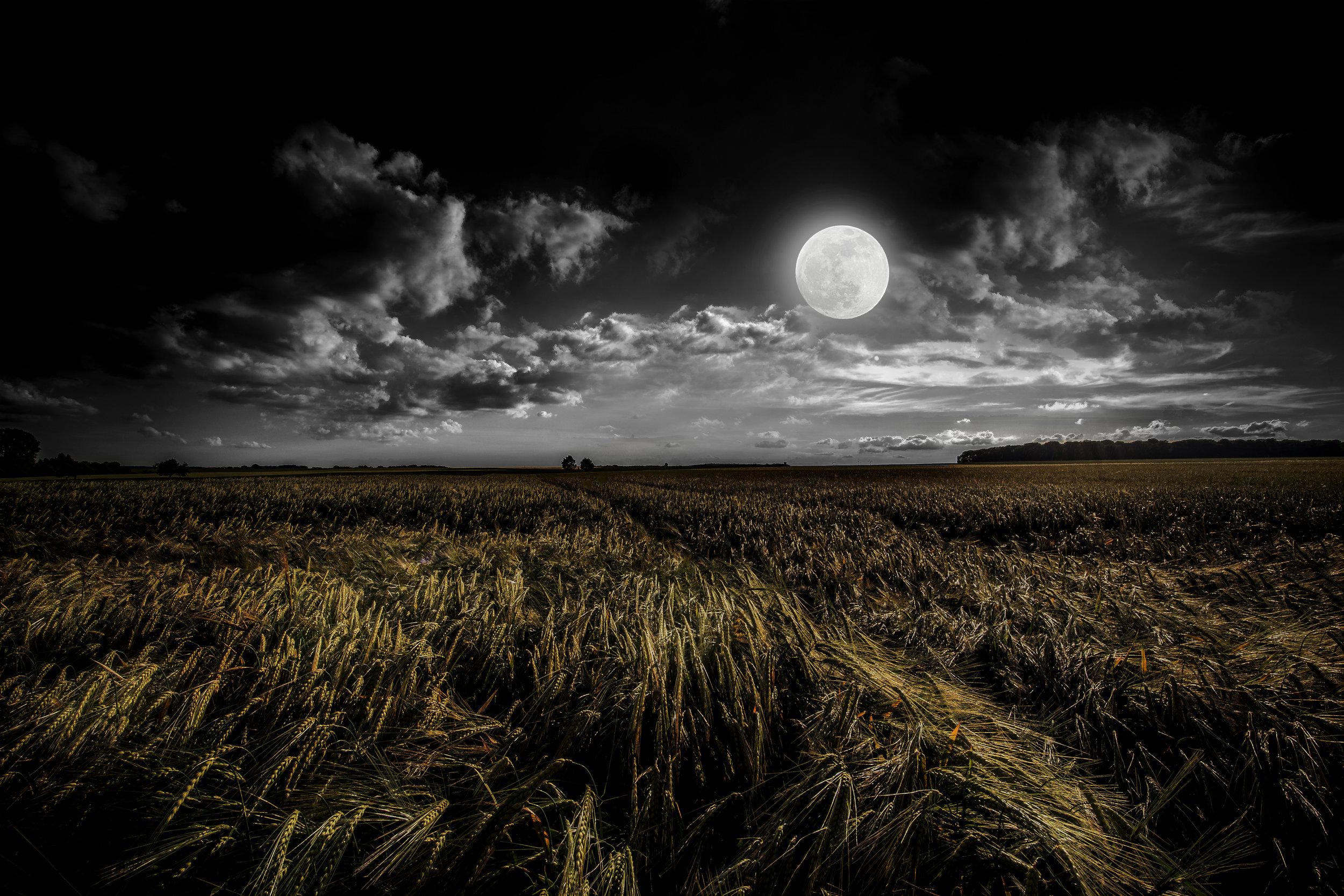 Full Moon Harvest - Bidens