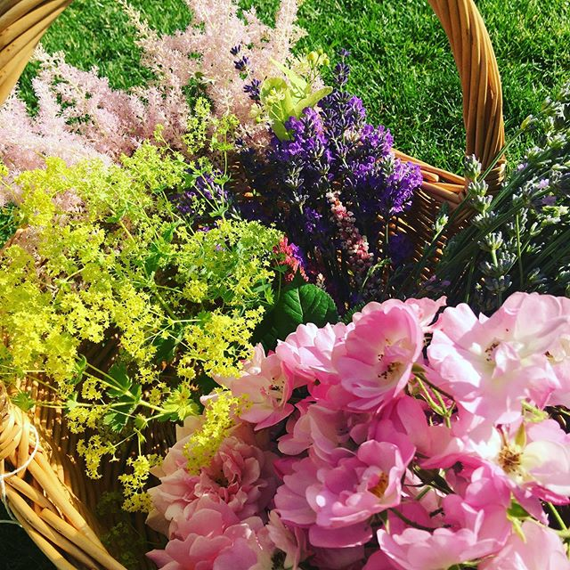 Beauty in the garden 🌷🌿🌸🌱🌼 Herbs, wild flowers and garden plants, all with their own kinds of healing power. Just looking at them raises my spirits, picking them connects me to the earth and the smells transports me to other places. Bliss 🌷🌿🌸🌱🌼 #garden #plants #herbs #wildflowers #beautyinnature #lavender #rose #limeflower #ladiesmantle #chamomile #herbalteas #herbalpower #plantpower #breathofthewild #connect #connectingwithmamaearth #summertime #lovelife #wildwaystea #wildwayswomen #mywildways