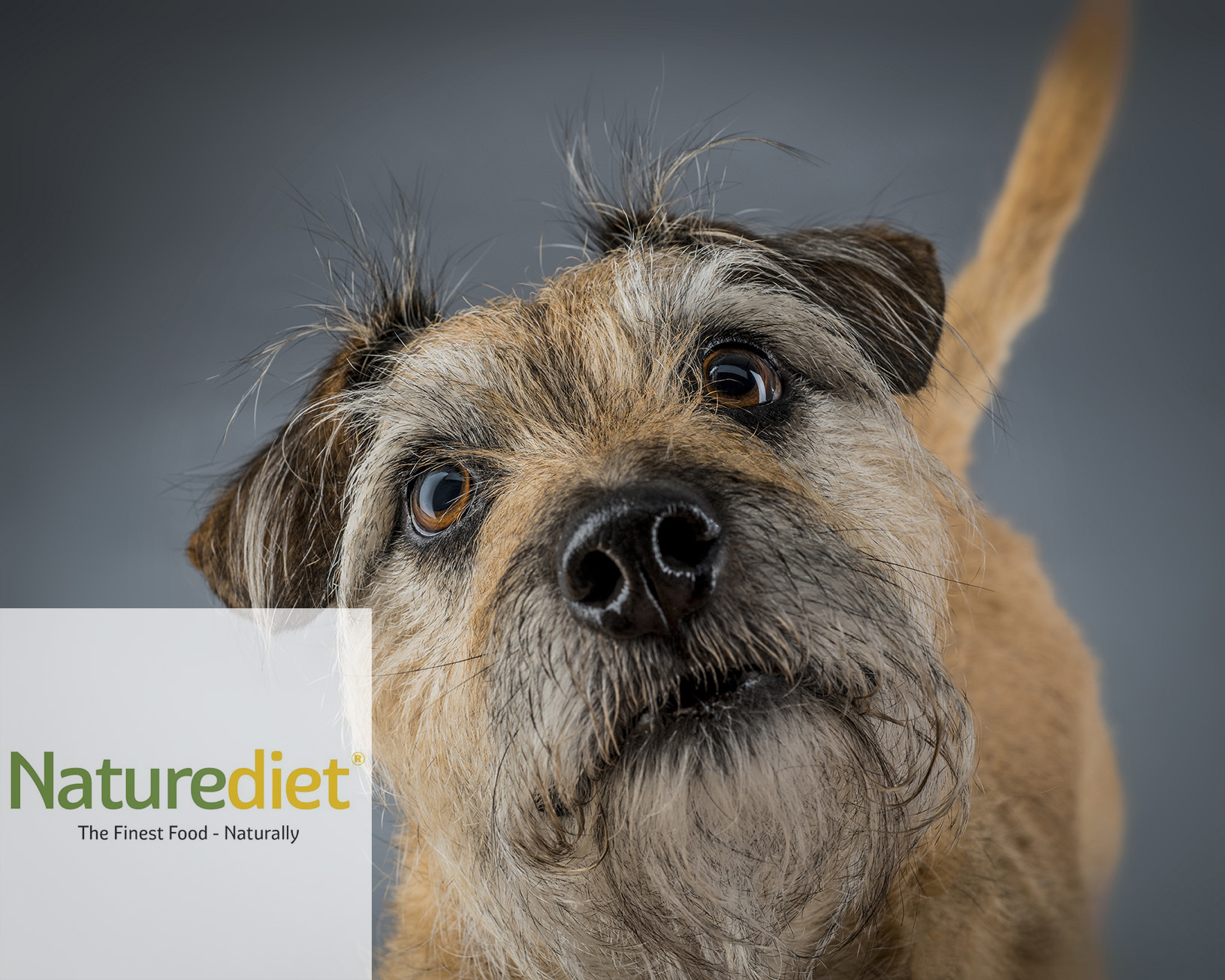 """Naturediet - """"Alex provided a highly professional and accommodating service, and achieved fantastic results from what was a very challenging photoshoot. Naturediet Pet Foods Ltd worked with Alex on a 4 day shoot photographing over 30 dogs for a new packaging project. Alex's patience was unfaultable and his studio provided the perfect environment for all the dogs, and their owners, who attended."""""""
