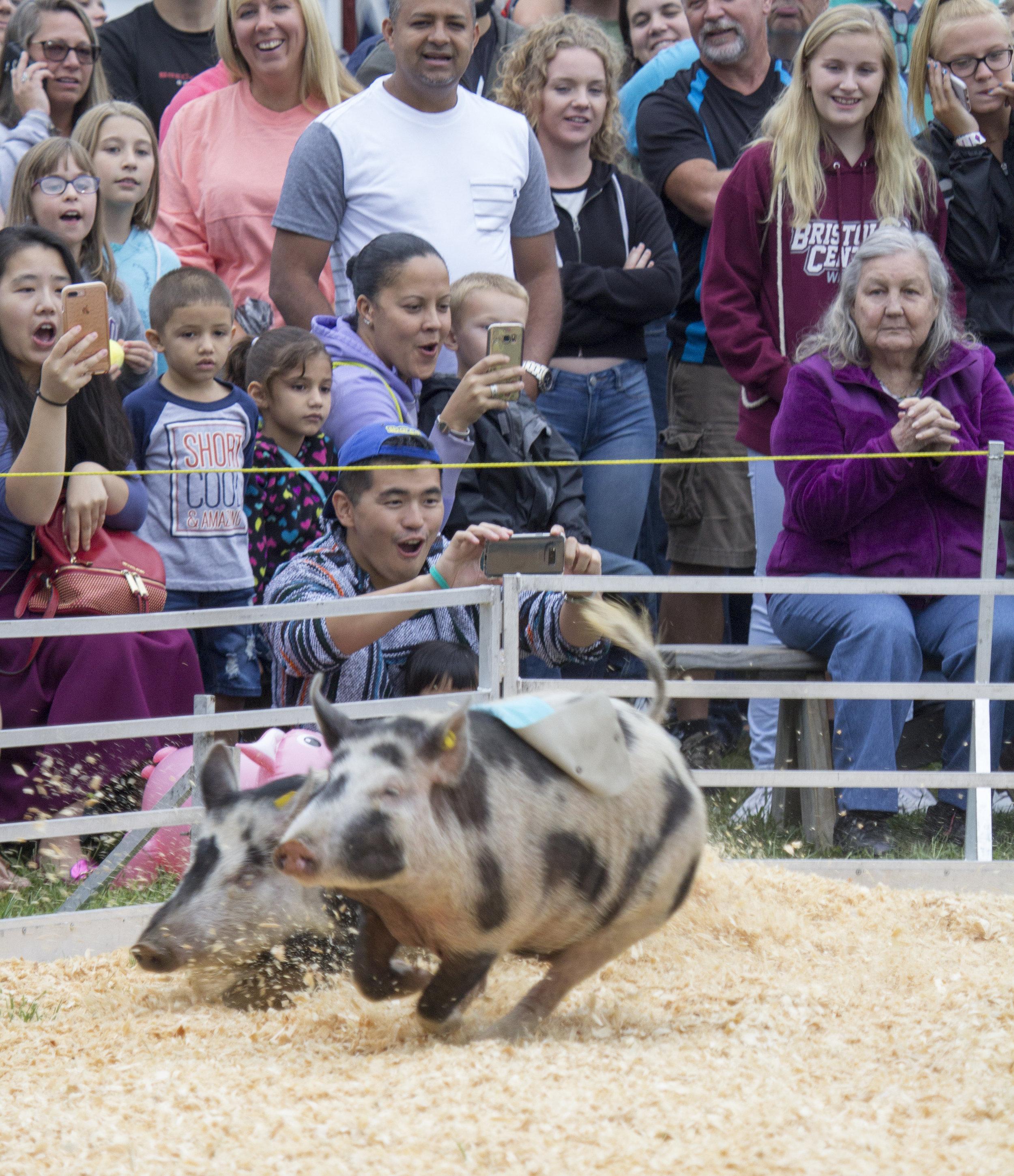 Pig Race.jpg