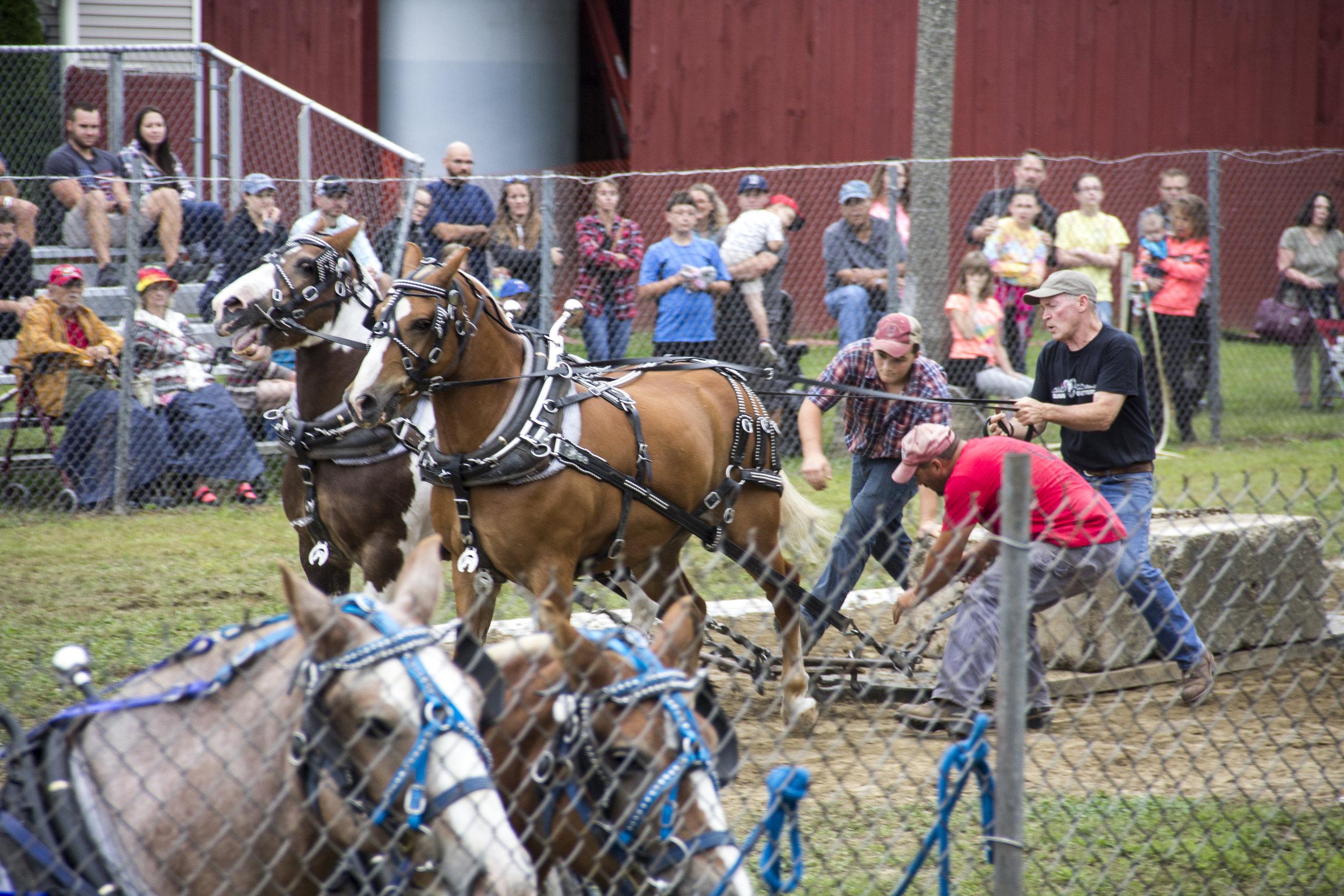 Horse Pull.jpg