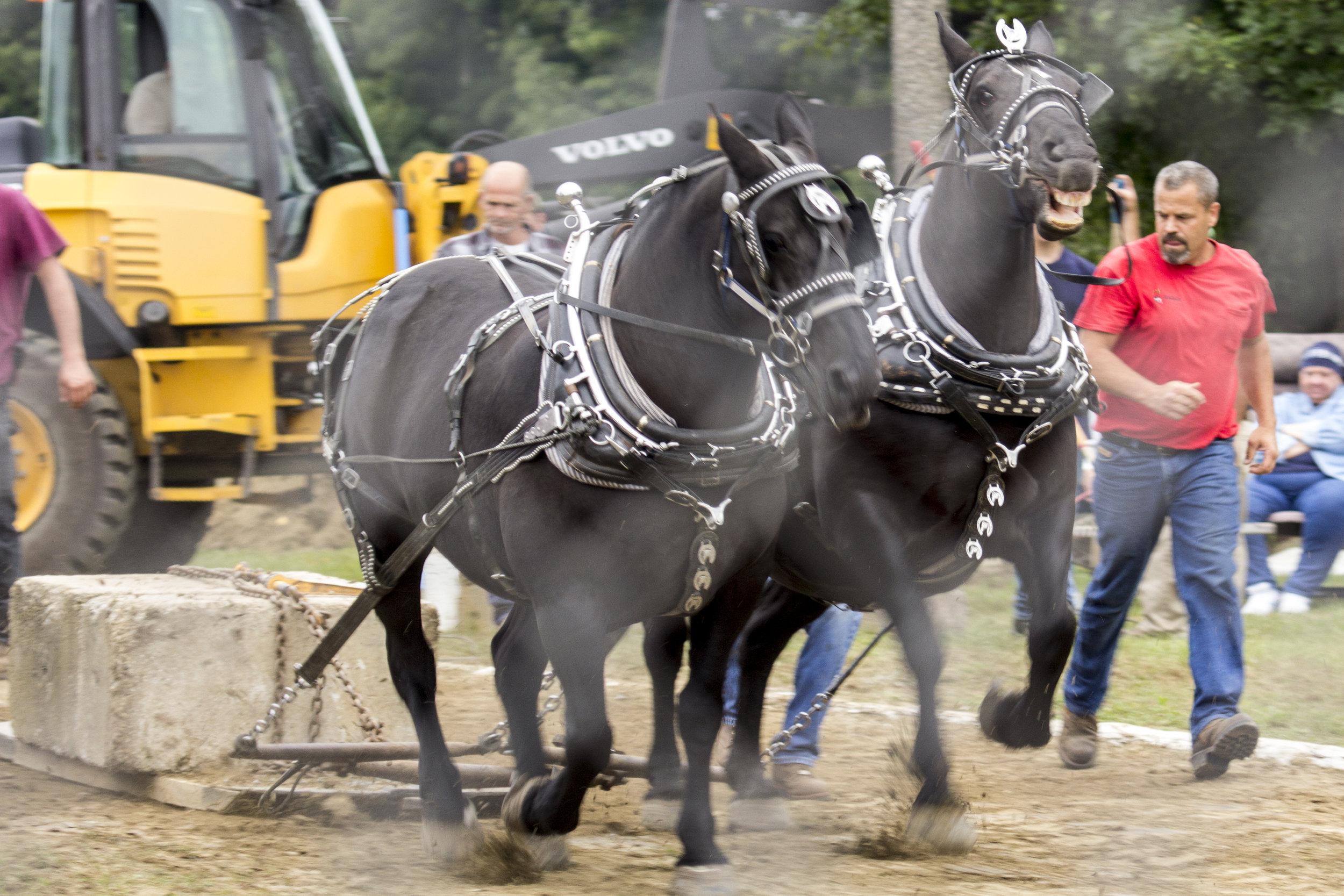 Horse Pull2.jpg
