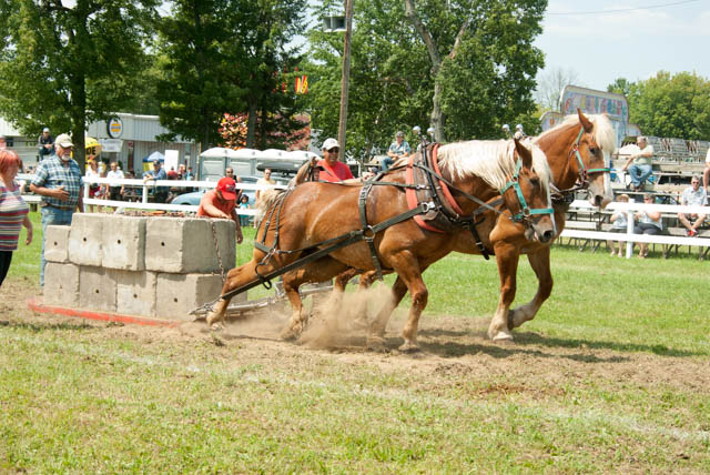 horse-pull.jpg