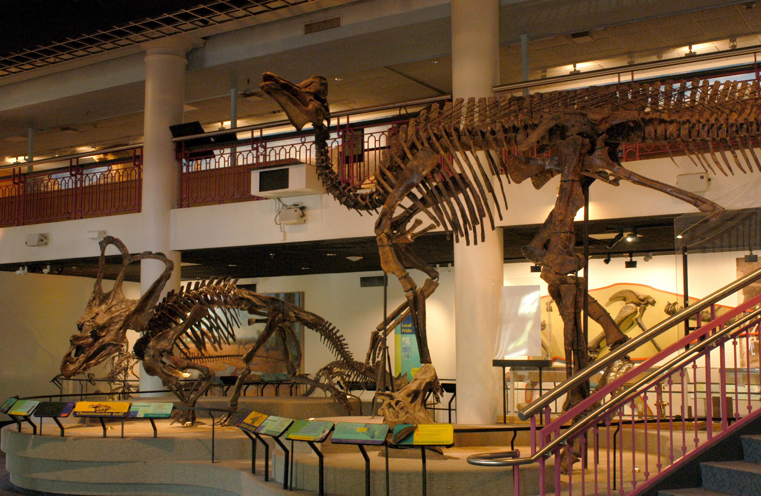 Dinosaur_Hall_Ornithscians.jpg
