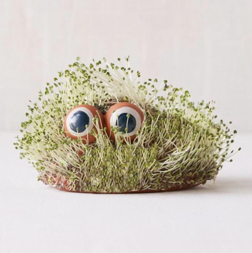 7. Mini Lil Blob Friend Chia Pet - $24.00
