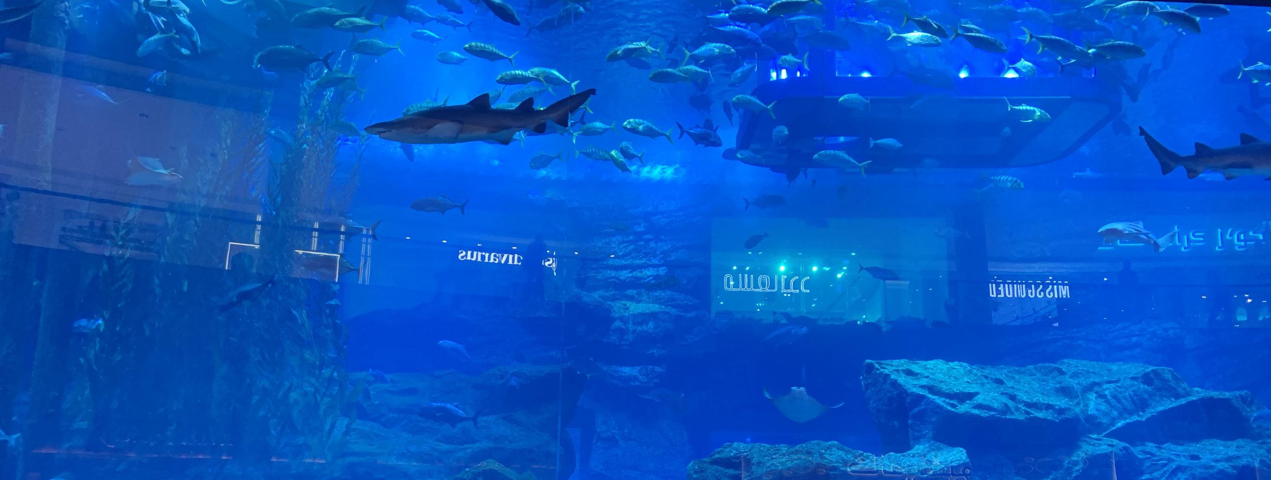 Aquarium inside Dubai Mall