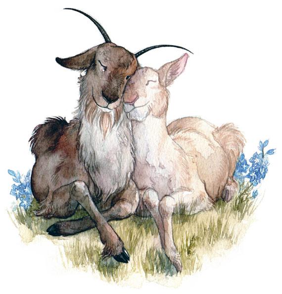 570_Goat-Wedding.jpg
