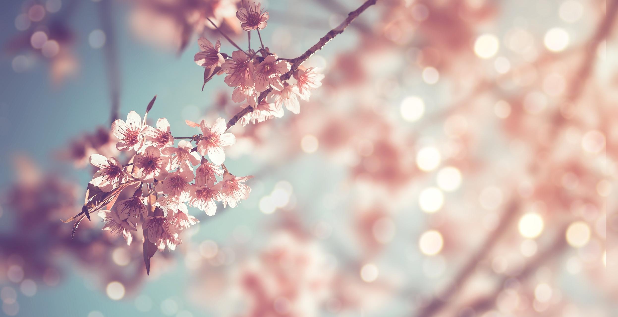 Aromatherapy flowers in Bristol