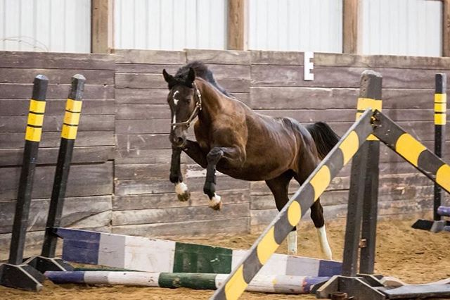 Enjoy the little monster jumping😍🥰 Tonight is my last ride before I leave for Virginia ☀️☀️ although I am excited to go I am going to miss my horses!  What's your favorite place to travel to?