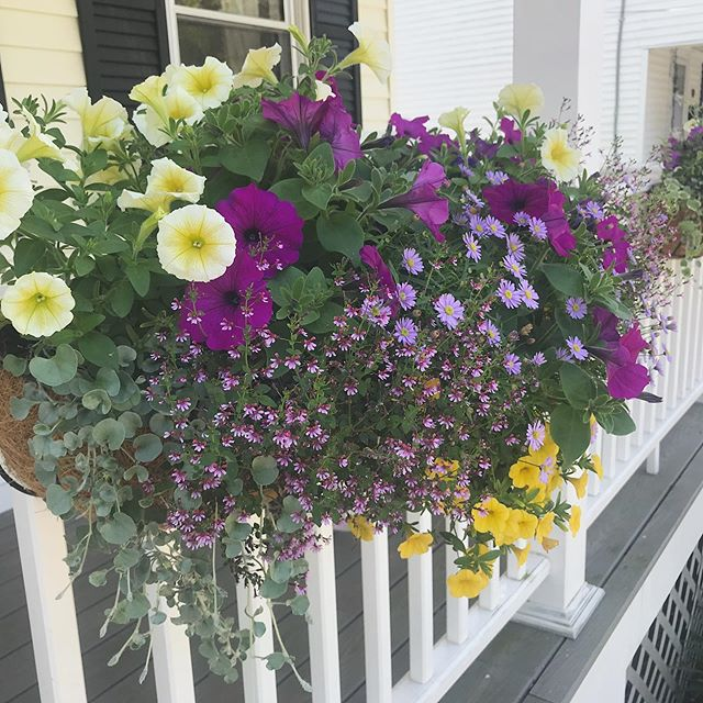 I often get asked how it all started. My mother and both grandmothers are extremely talented gardeners. I grew up watching them kneeling in grass, planting flowers without gloves. They love the feel of the dirt and nurturing something over time to grow. My love for flowers started at a young age. I love doing window box installs at clients homes as well as my own pictured here. . . . #windowboxes #containergardening #annuals #gardendesign @mahoneysgarden @loweshomeimprovement