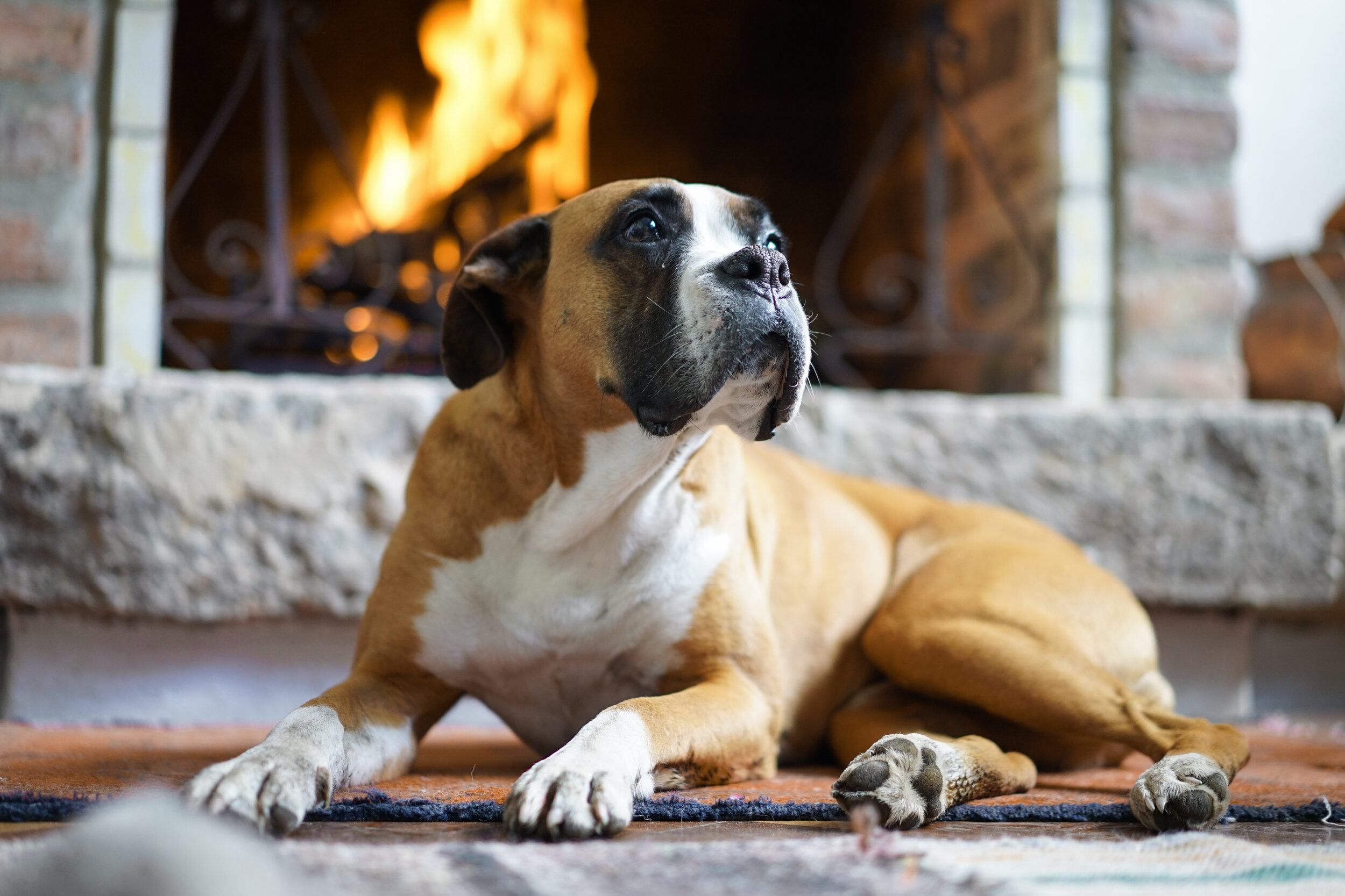 dog in front of brick wall and fireplace