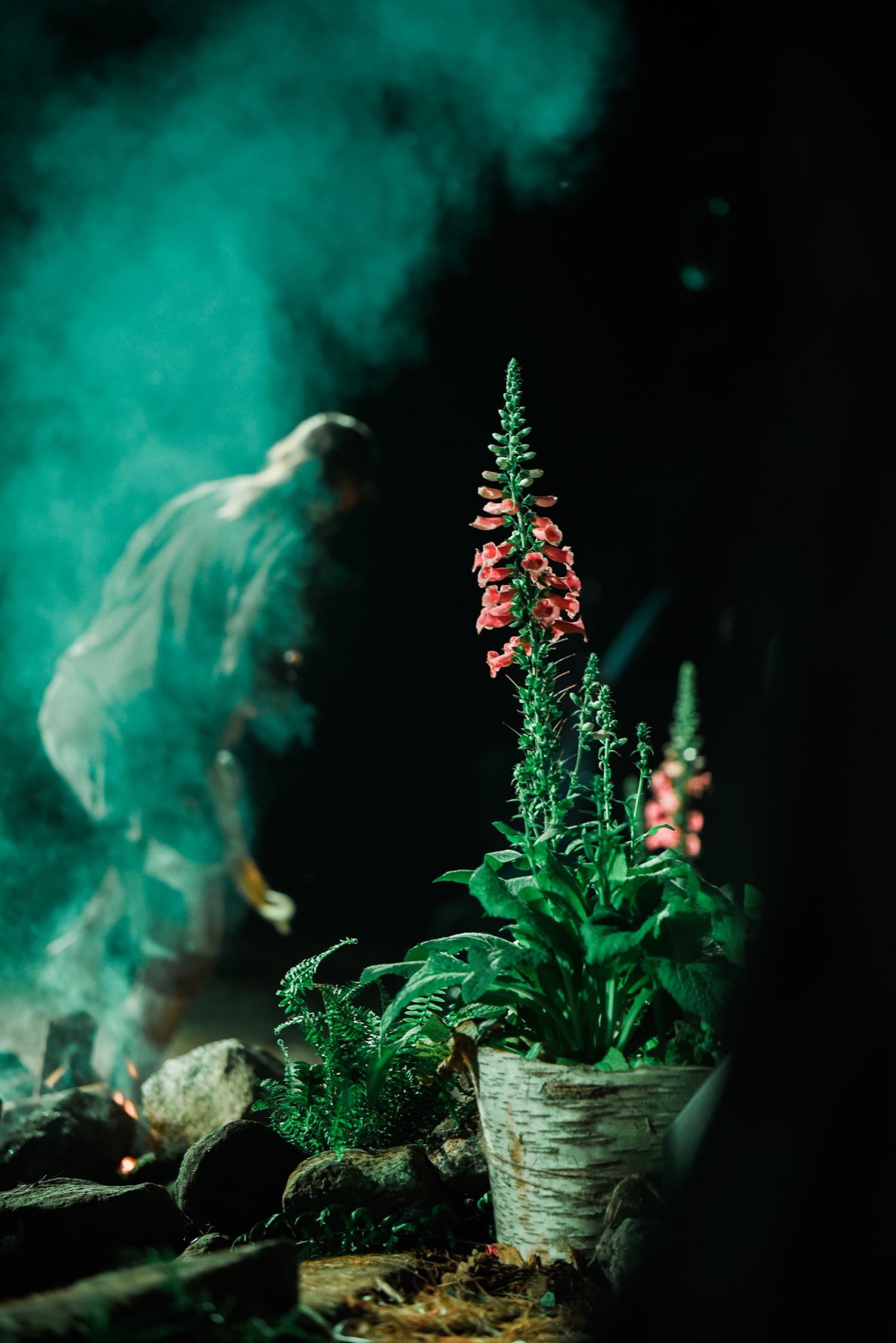 ephemera designs unifier festival photography berkshires of green haze with pink flower plant