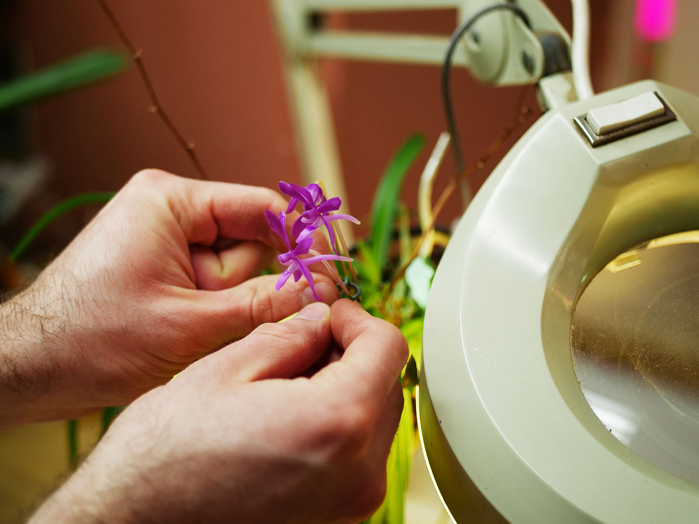 How to Care for Your Orchid - Our knowledgeable team will work with you to find the best orchids to fit your environment and experience level. We strive to be the team you turn to as your go-to resource for expert level advice and award-winning orchids. We encourage you to use these care tips and to reach out to us if you have any questions.