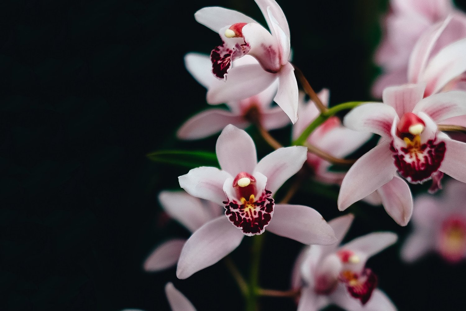 Shop Our Orchids and Orchid Supplies -