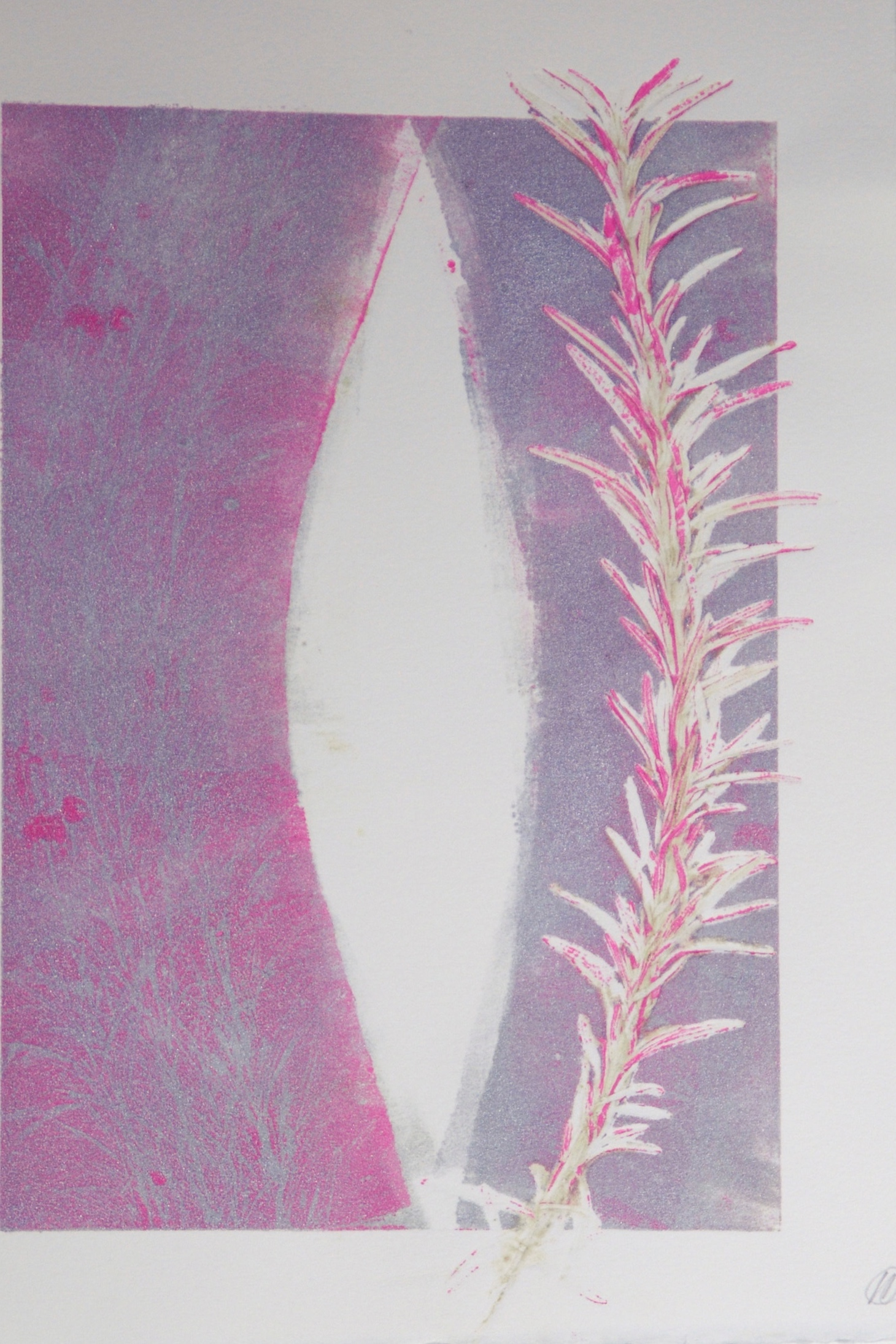 rosemary tannin with silver and pink in on paper, letterpress