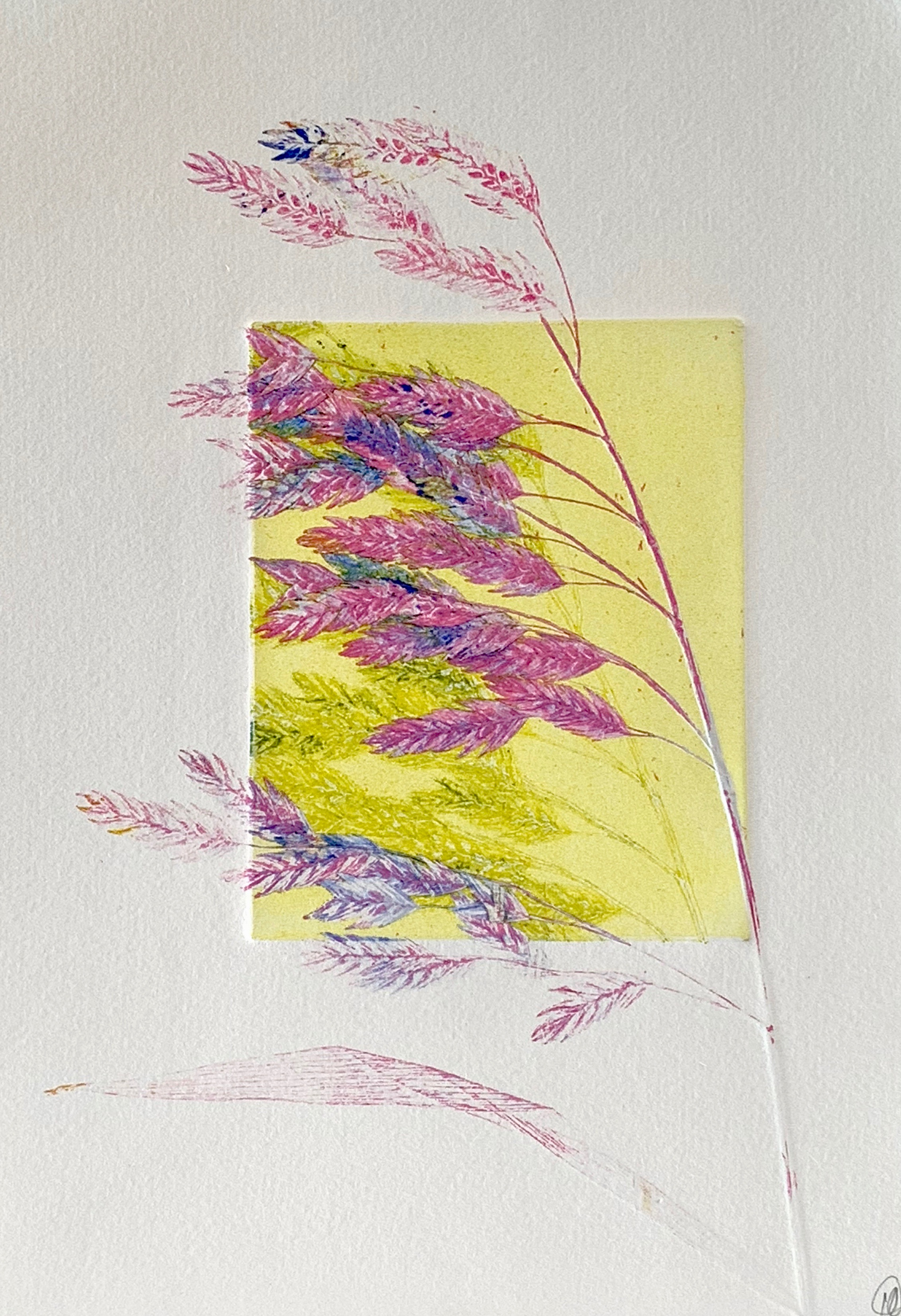 oats, tannin + ink on paper
