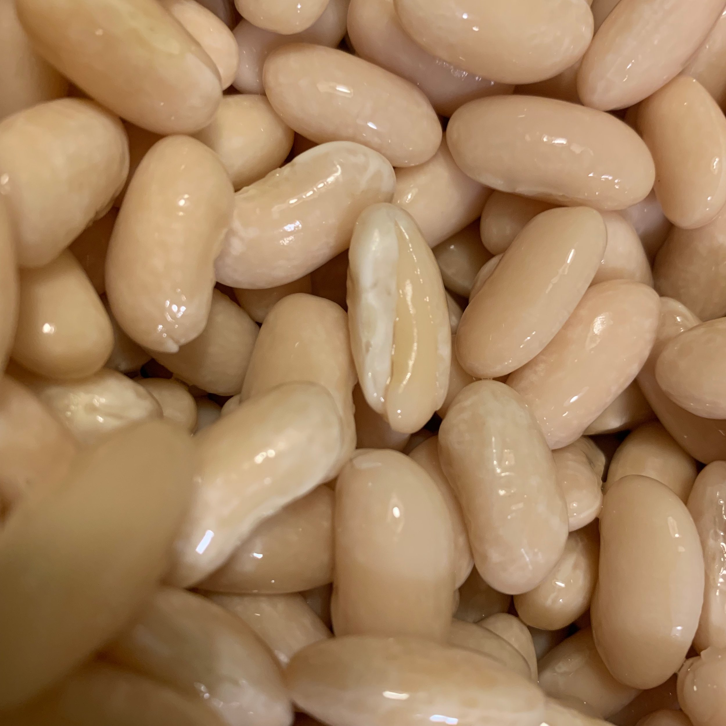 soak your beans in warm water with baking soda and see if you can get them to sprout