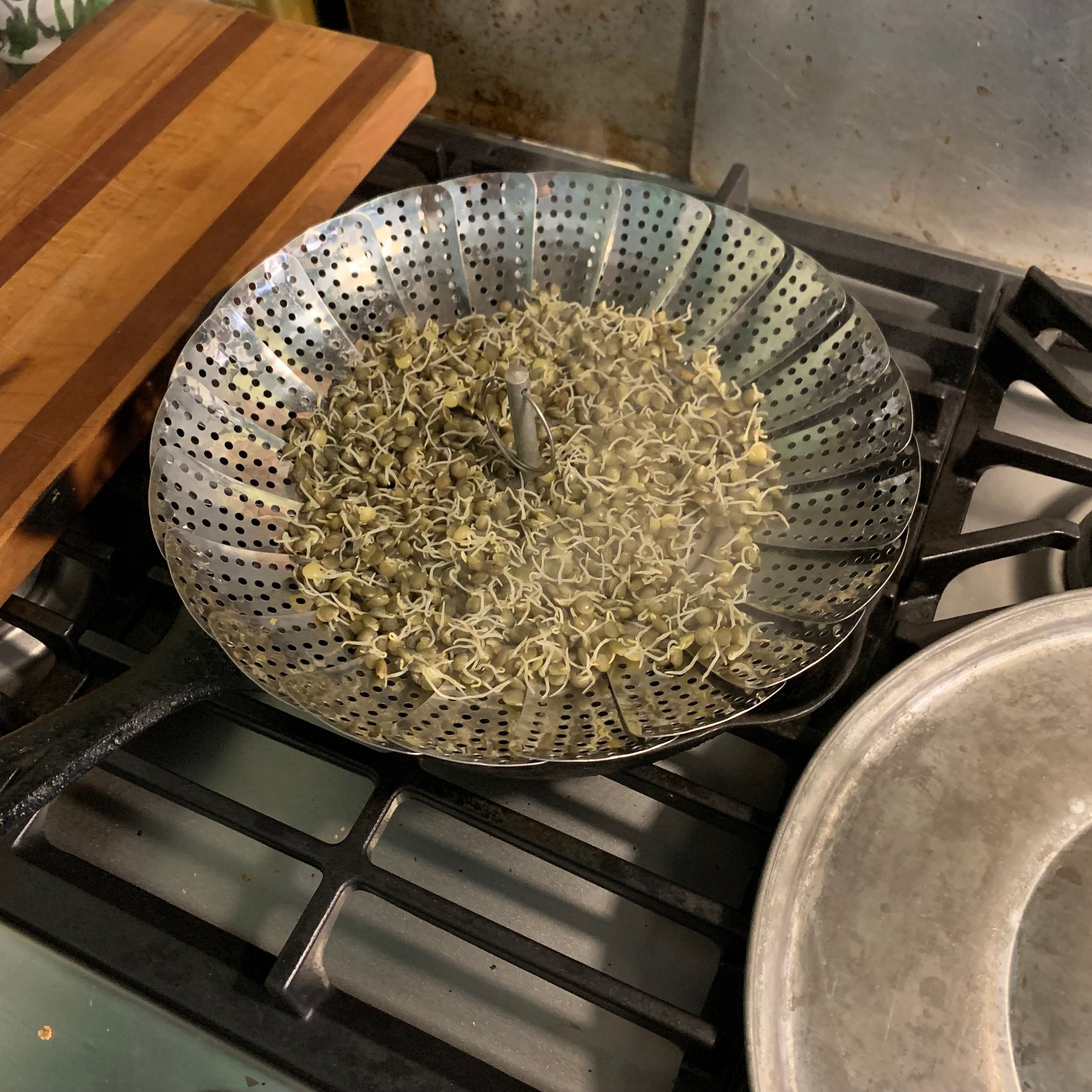sprouted lentils in a steamer over a cast iron pan with water, I used any large lid to hold in the steam.
