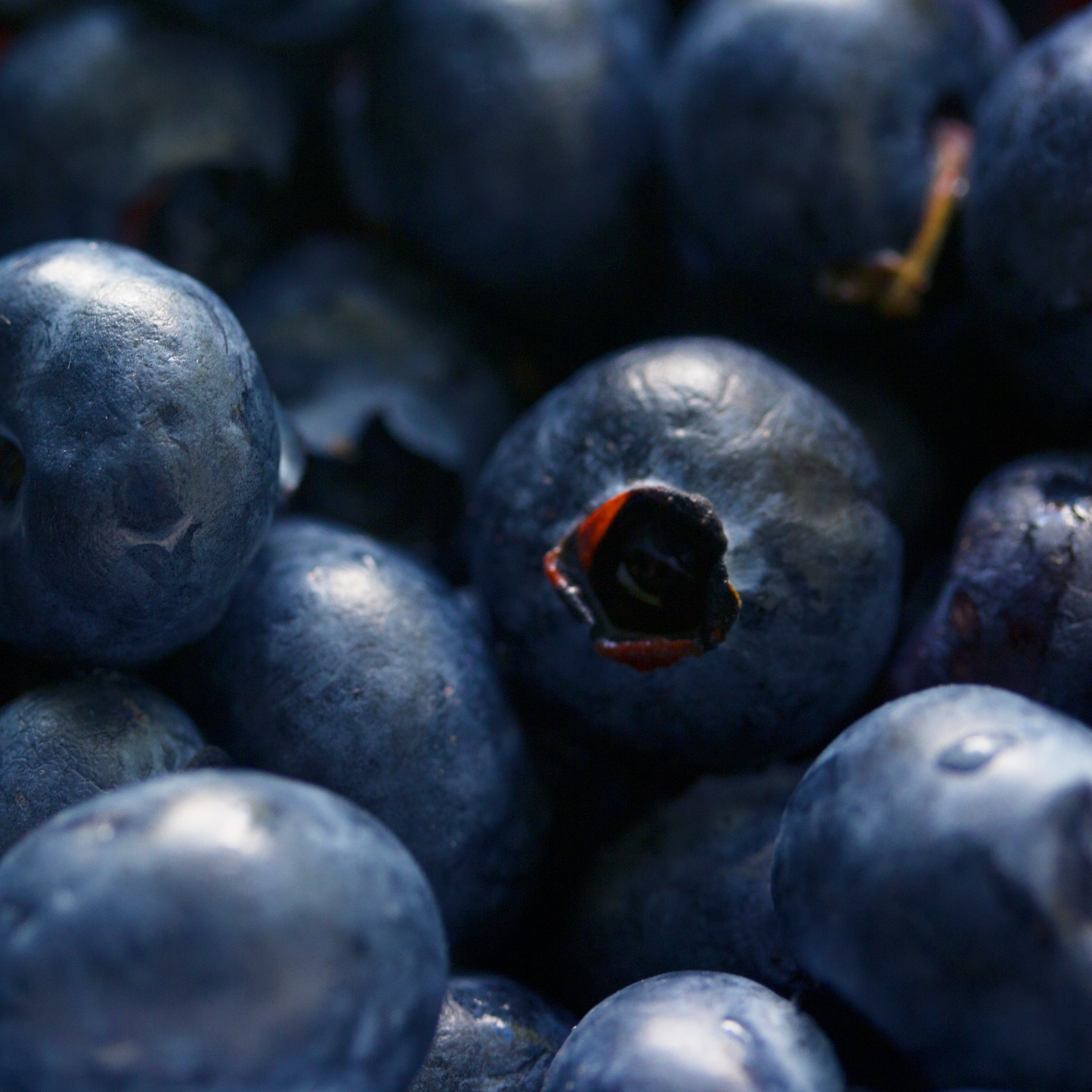 antioxidant-berries-bilberry-139749.jpg