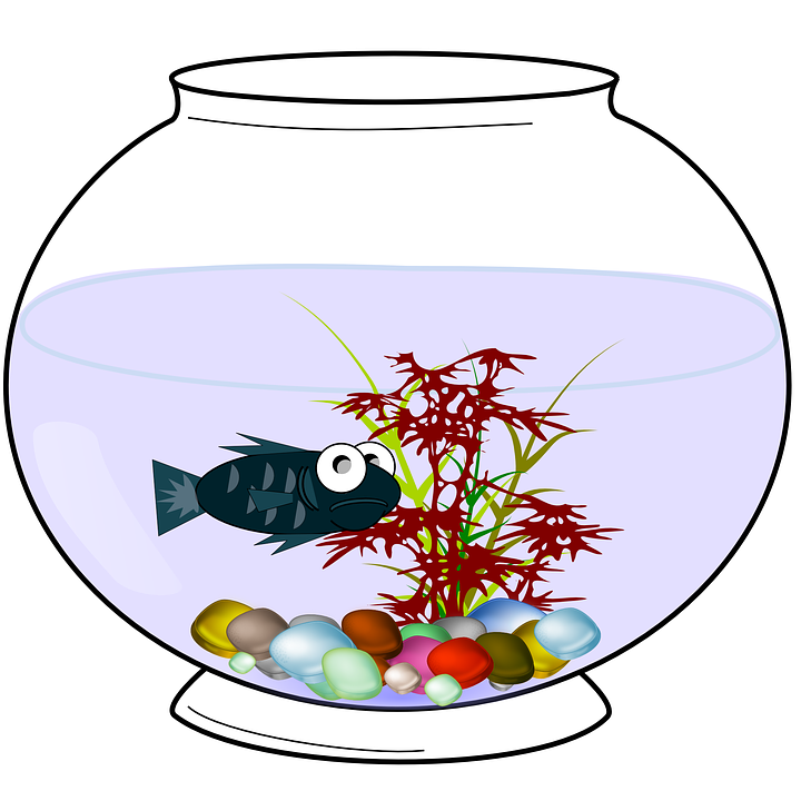 A fishbowl is a tiny ecosystem! -