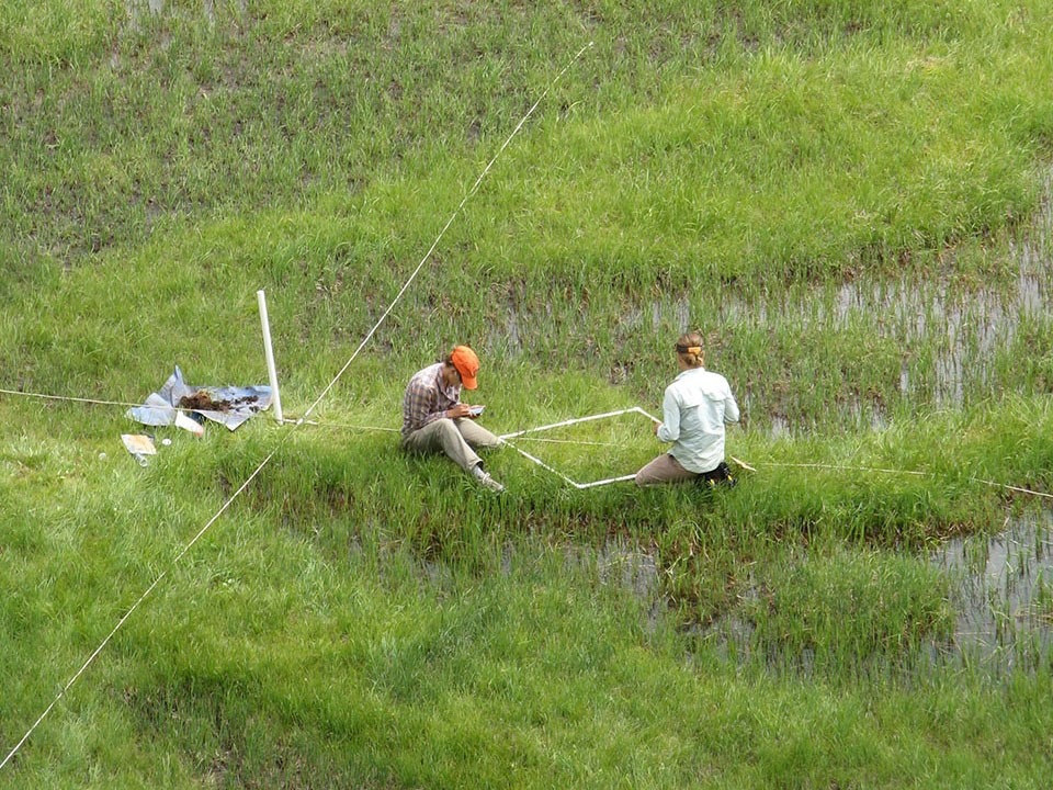 Ecologists in a wetland ecosystem -