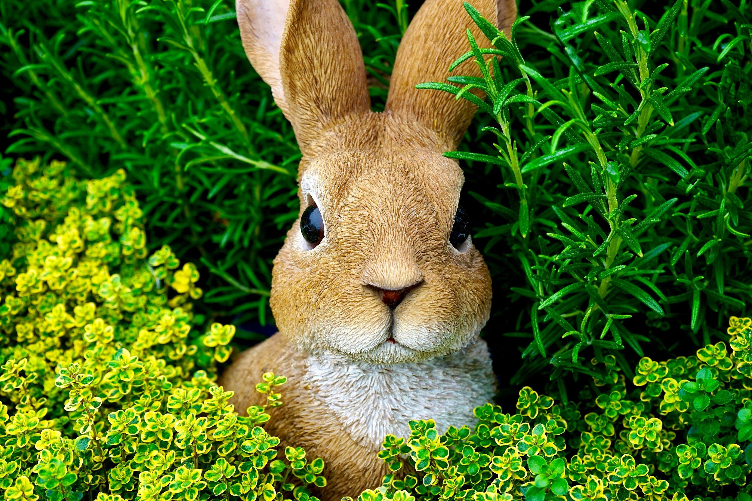 bunny-cute-ears-383557.jpg