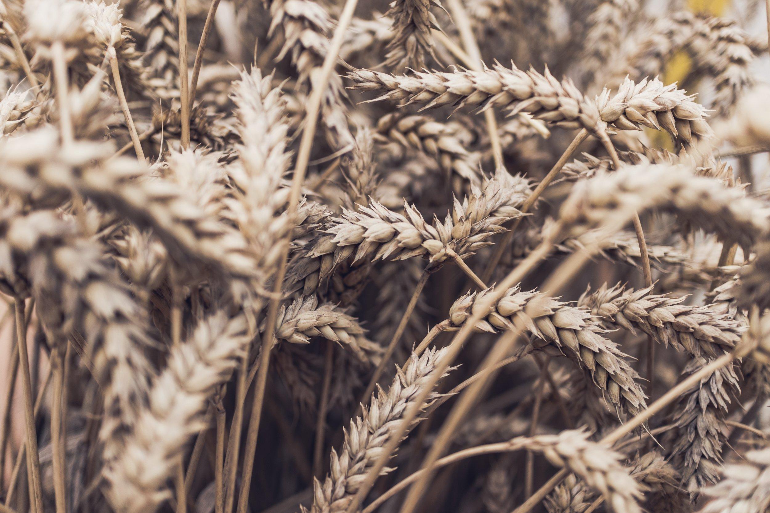 Agroindustrial -