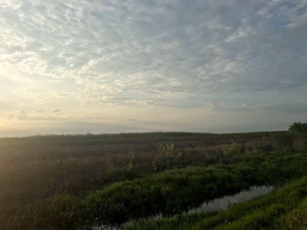 Coastal prairie outside of Houston, Texas