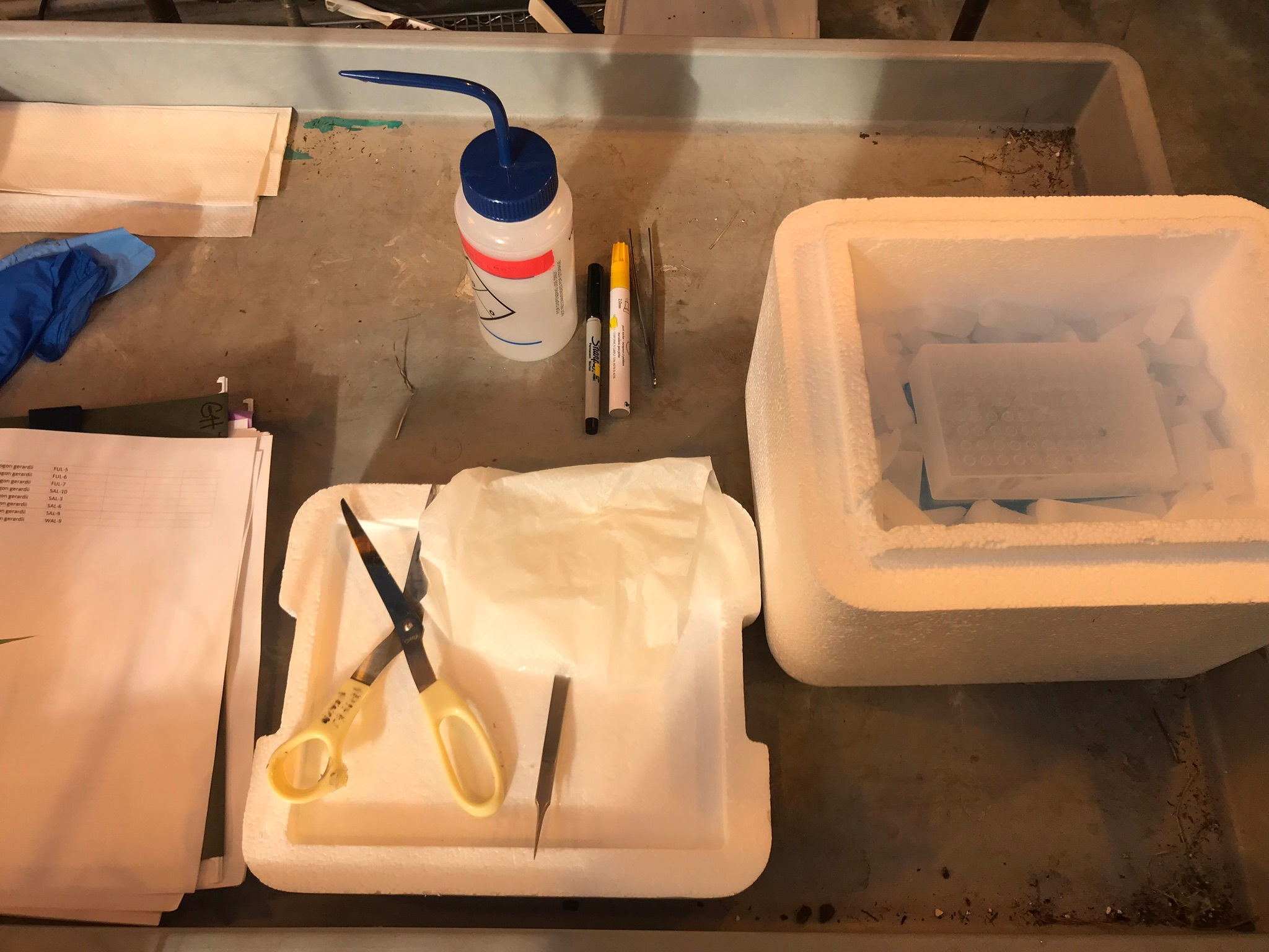 Clean scissors, forceps, and tube rack on dry ice for careful tissue collection