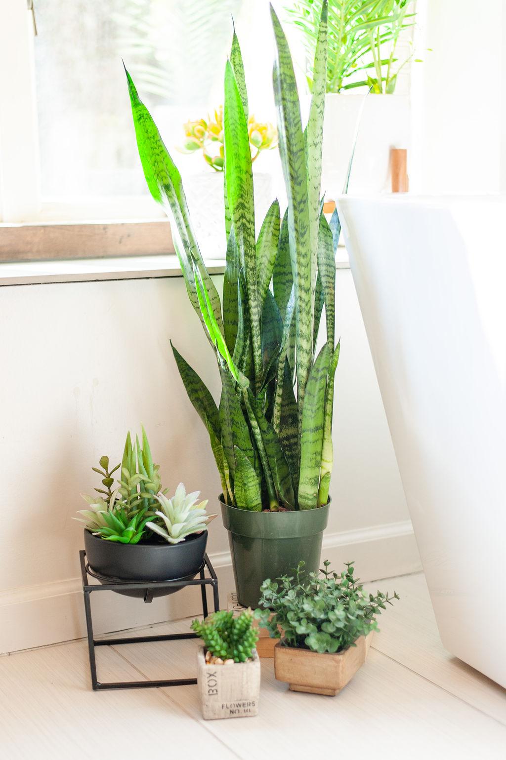 Blank-Canvas-Interior-Design-in-kansas-city-bathroom-plants.jpg