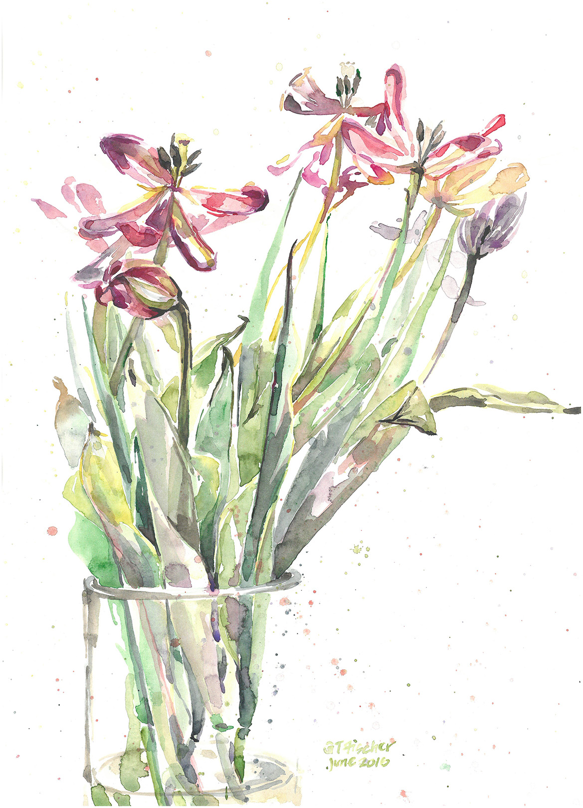 Dying Tulips