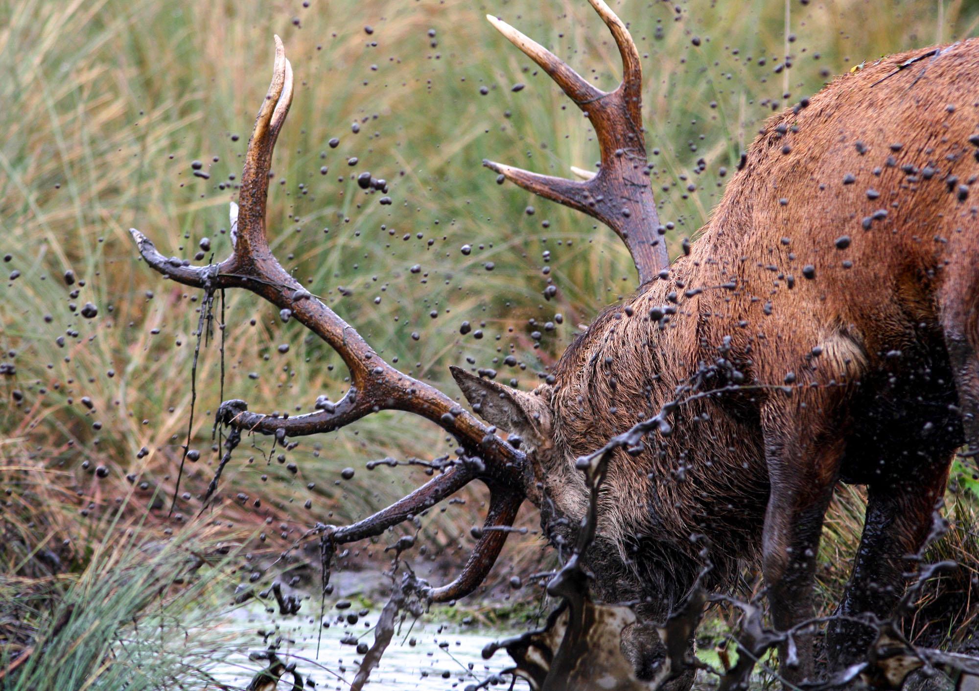 deer2 (3).jpg