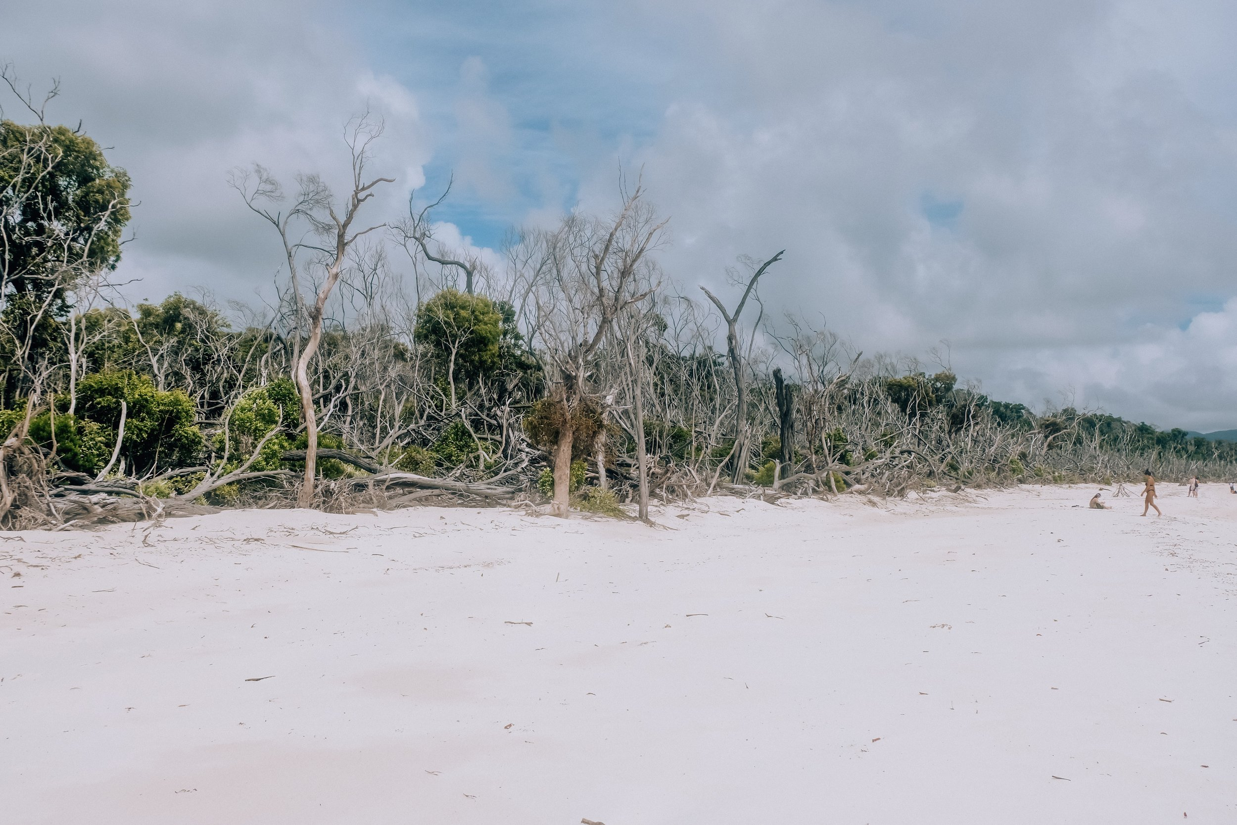 Cyclone damage to Whitsunday Island in March 2017, all the trees look like this on this part of the island
