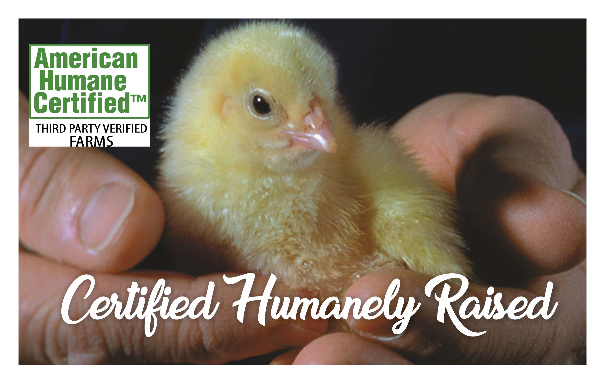 AHA Chick Pic-Cert Humanely Raised 3.png