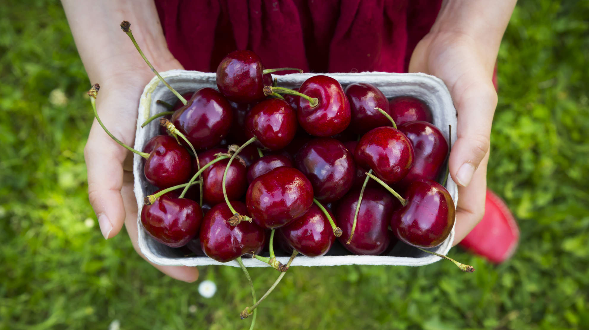 Looking for fresh local local cherries? - Click on image for farms & U-Pick
