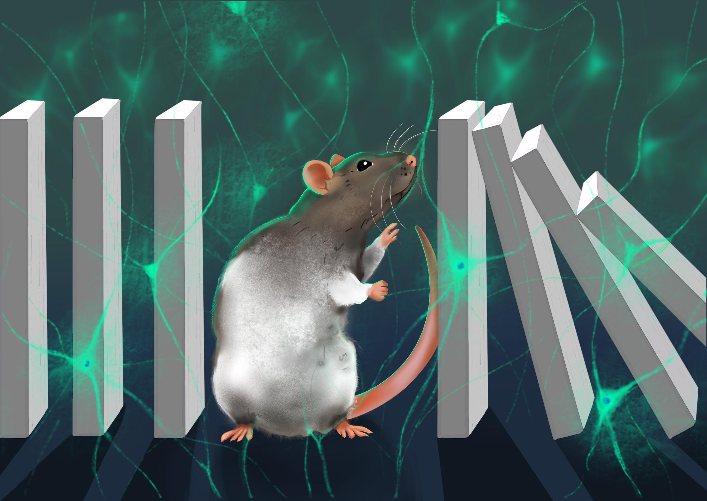 Sabariego et al. 2019 - Neuron