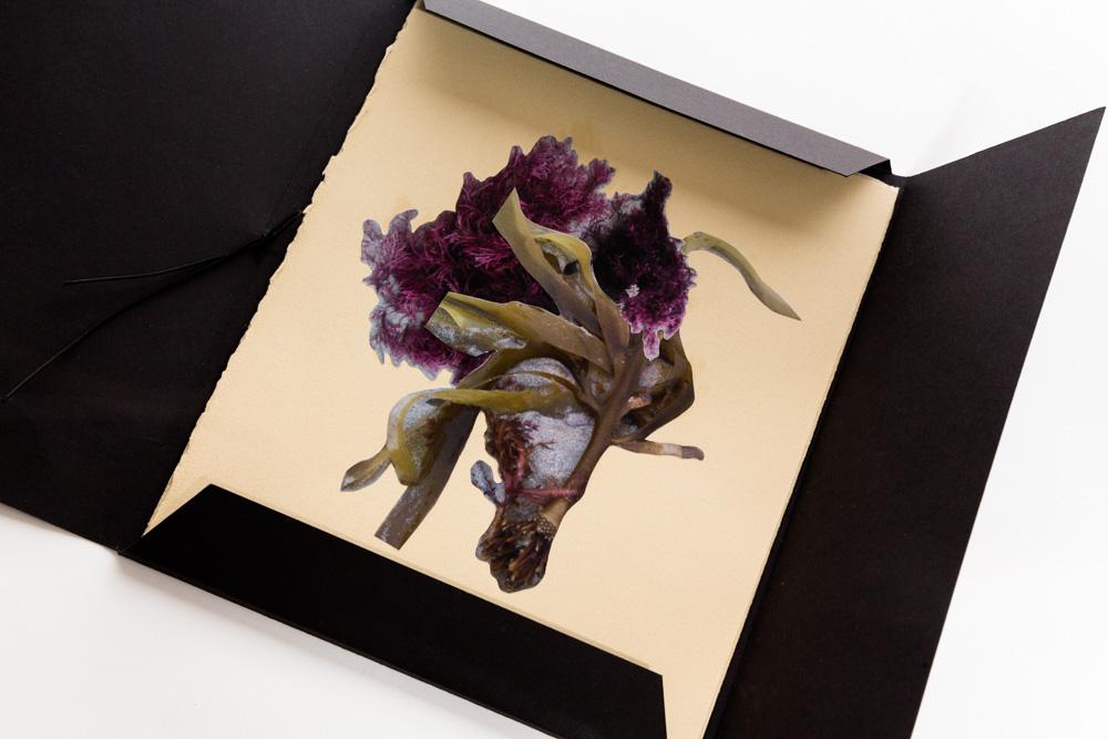 ®JL-Narelle White-Ceramics-Seaweed Artist Book.jpg