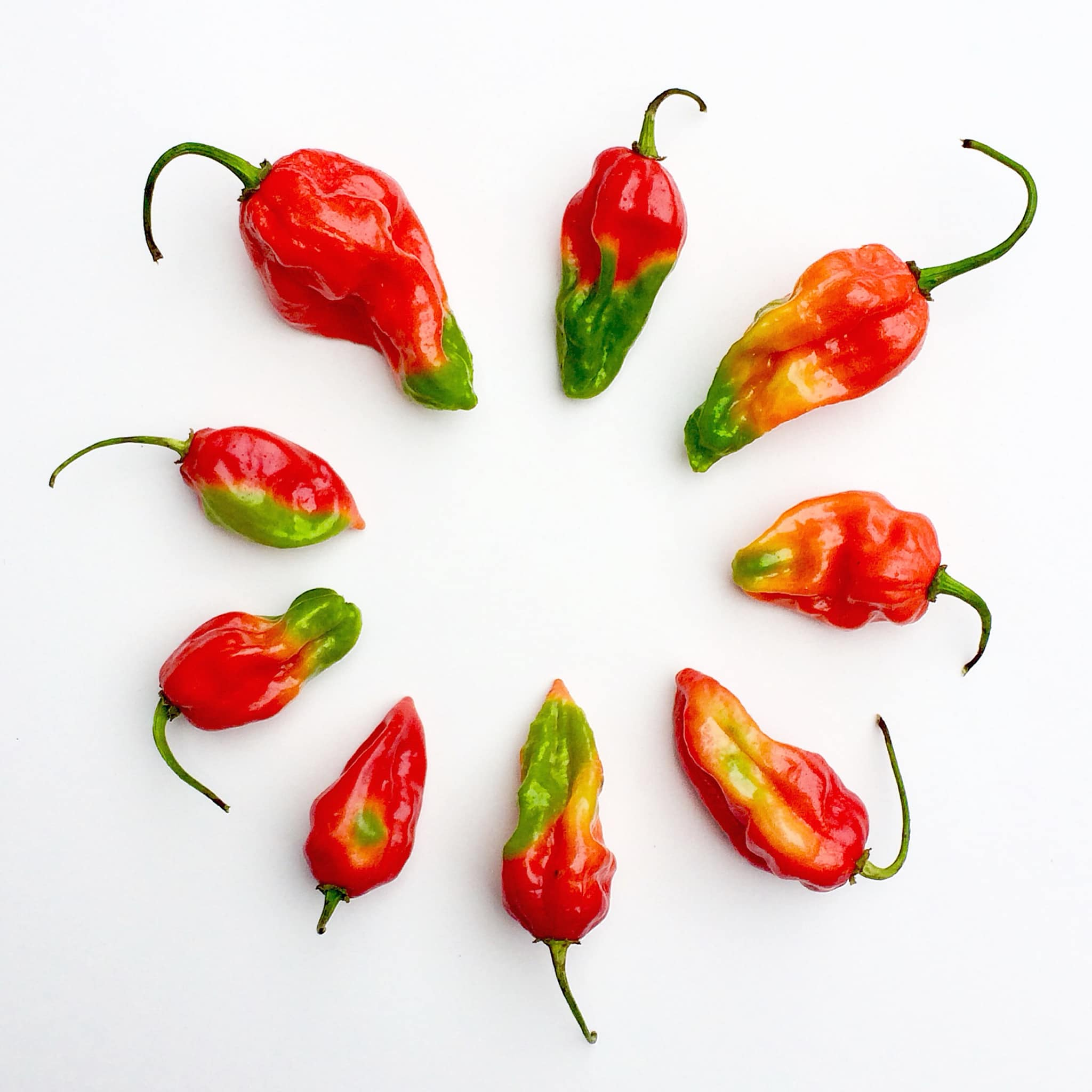 peppercircle.jpg