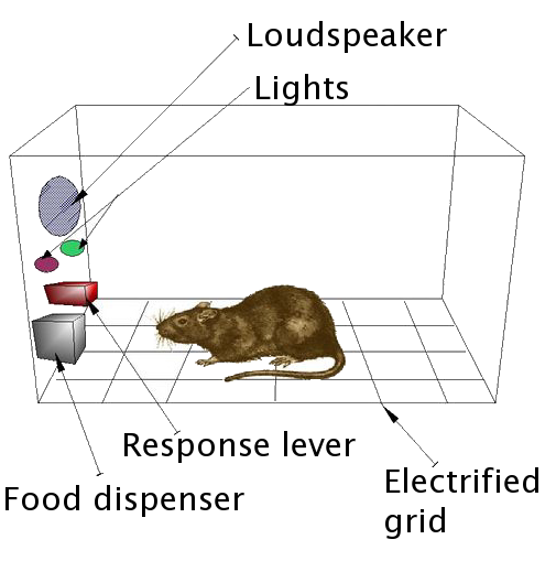 An operant condition chamber (a.k.a. Skinner box) is used to show how brains are easily wired to repeat behaviors based upon positive and negative reinforcement. In this diagram, we are the rodents, social media is the lever, and Likes are the food.