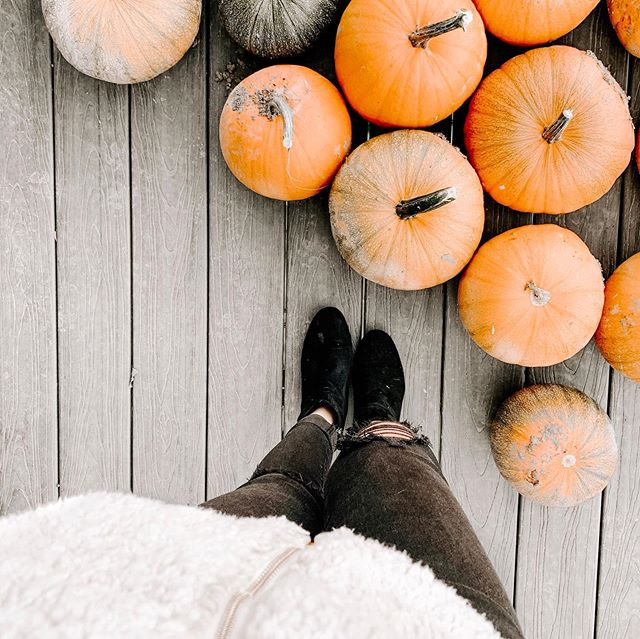 fall feels ft. cozy textures and pumpkins my parents grew 🍂