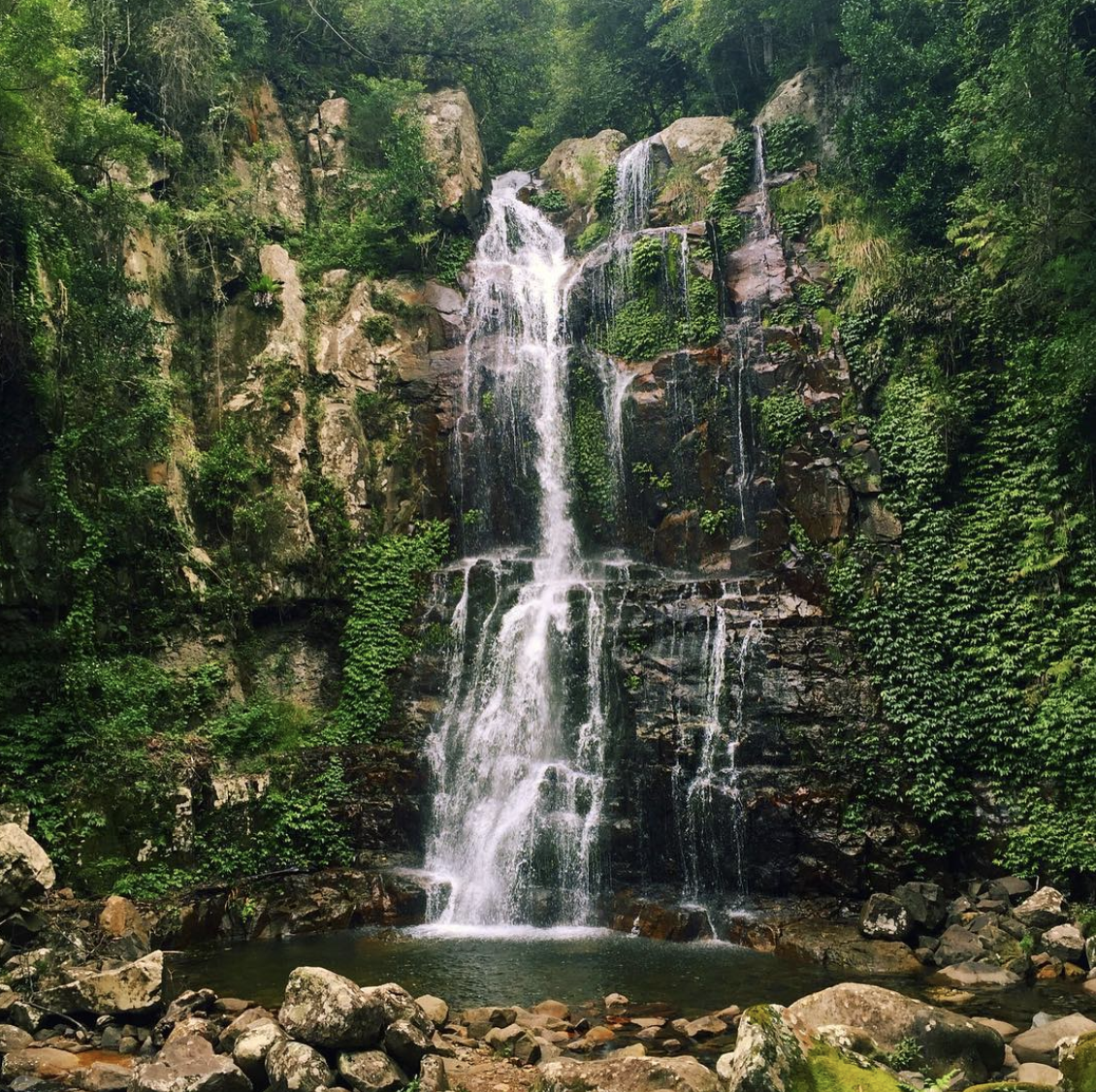 MINNAMURRA WATERFALLS   Discover the beauty of the Minamurra Rainforest. There are walking trails to the waterfalls. You can take The Falls walk and enjoy what the rainforest has to offer.
